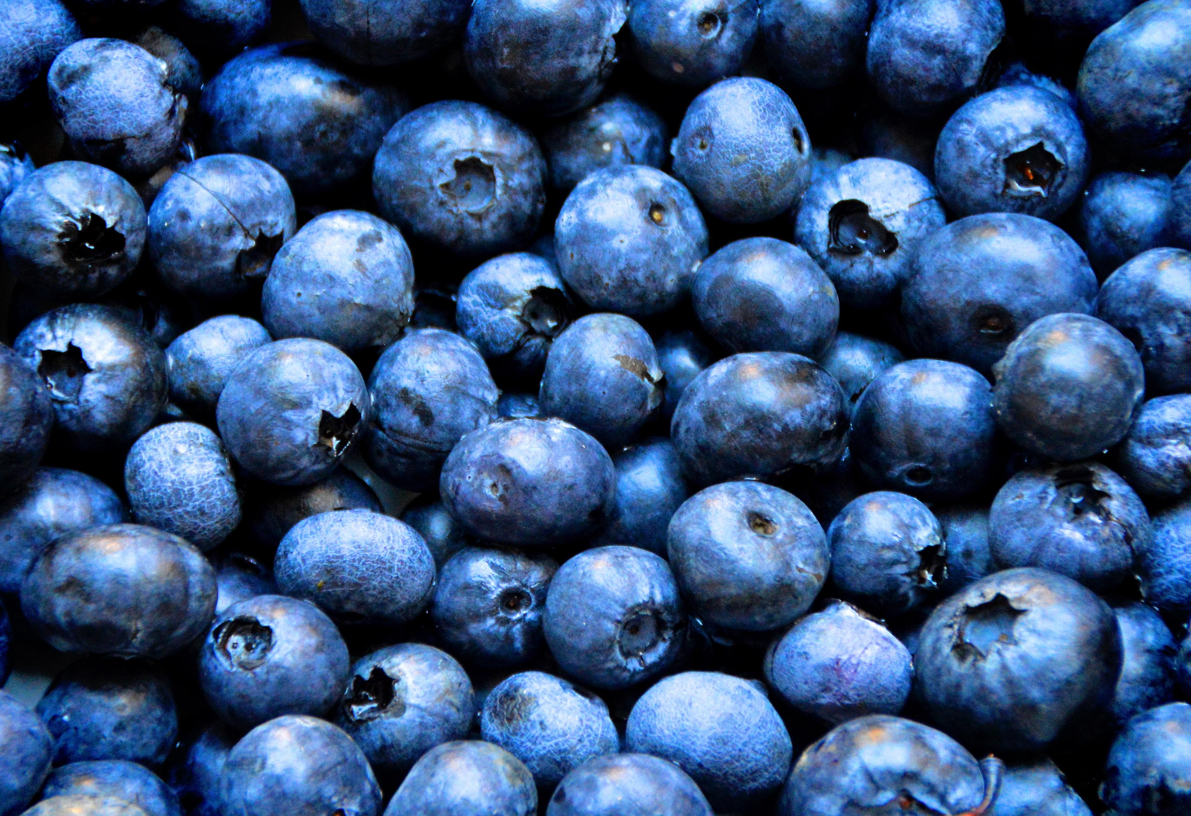Blueberry Fruit Free Images : b...
