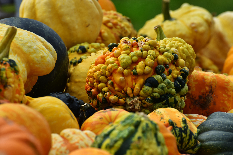free images fruit flower orange dish meal food harvest