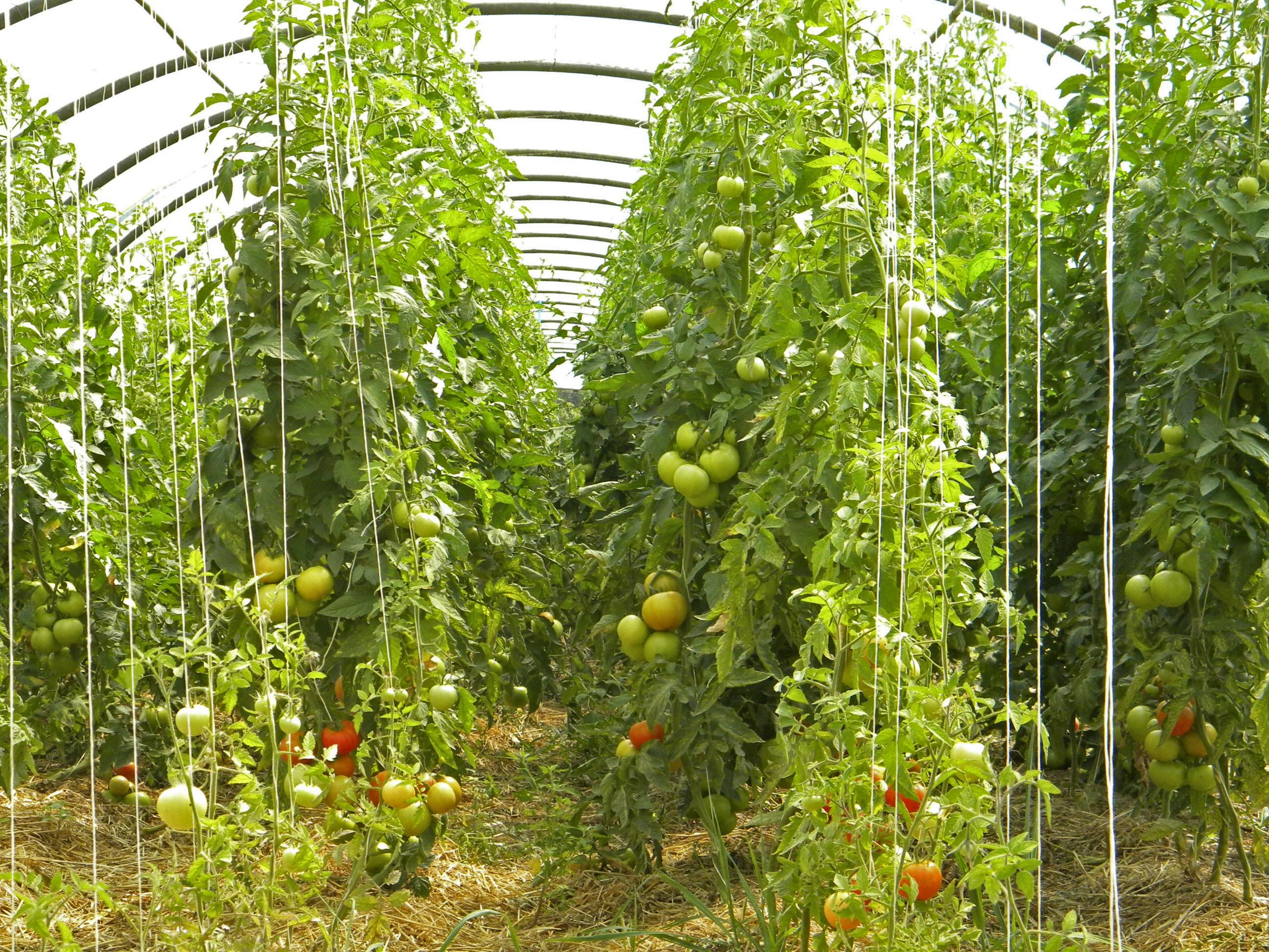 kostenlose foto frucht blume lebensmittel produzieren gem se ernte landwirtschaft. Black Bedroom Furniture Sets. Home Design Ideas