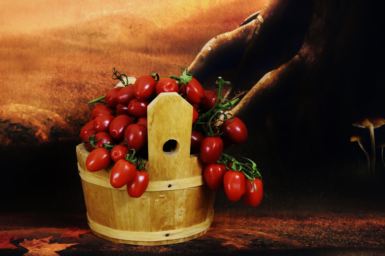 Tomato Plant Painting