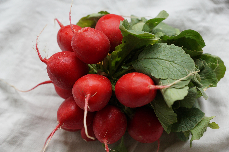 kostenlose foto frucht blume lebensmittel rot produzieren gem se essen rettich. Black Bedroom Furniture Sets. Home Design Ideas