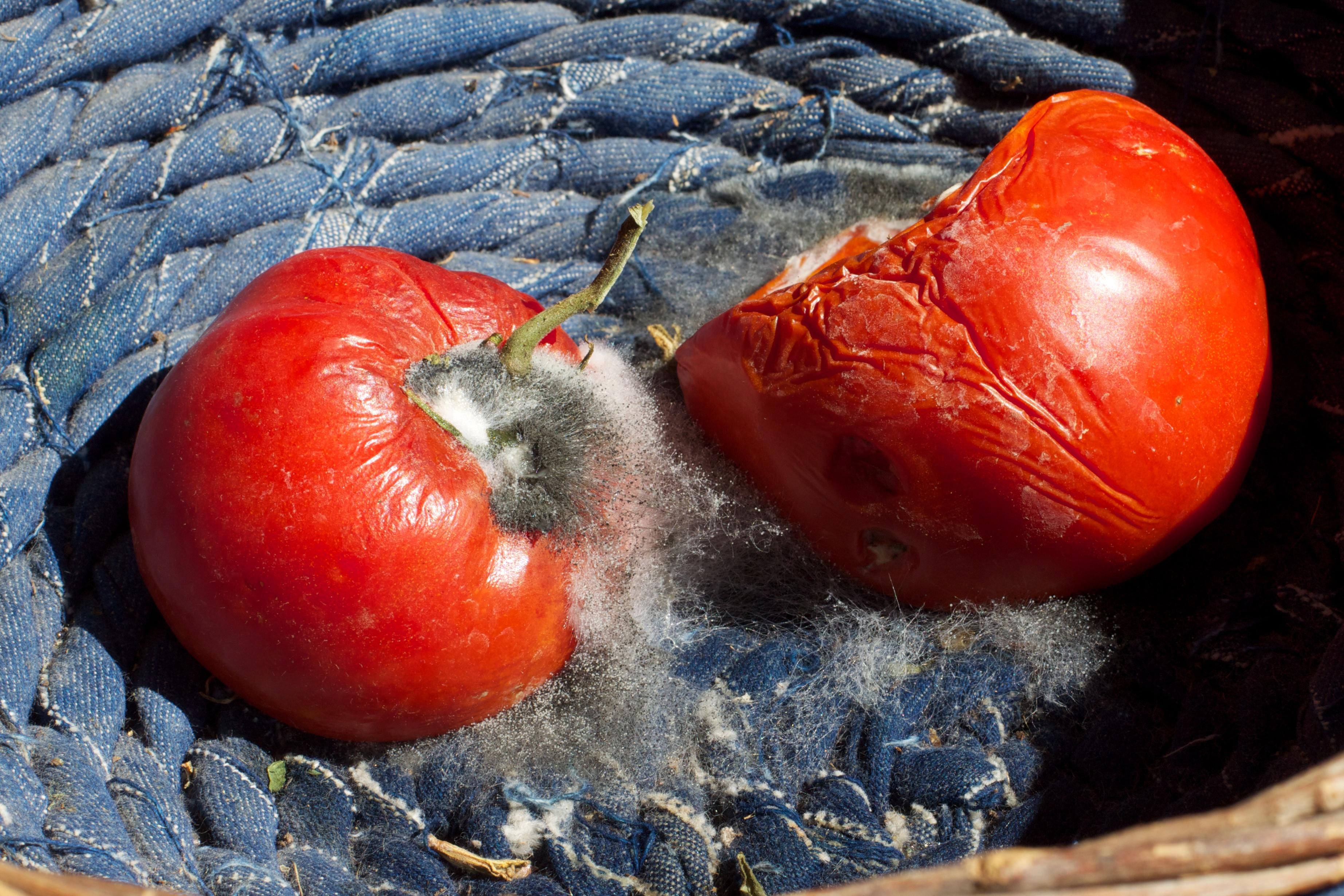 Fotoğraf Meyve çiçek Gıda Kırmızı üretmek Sebze Boyama