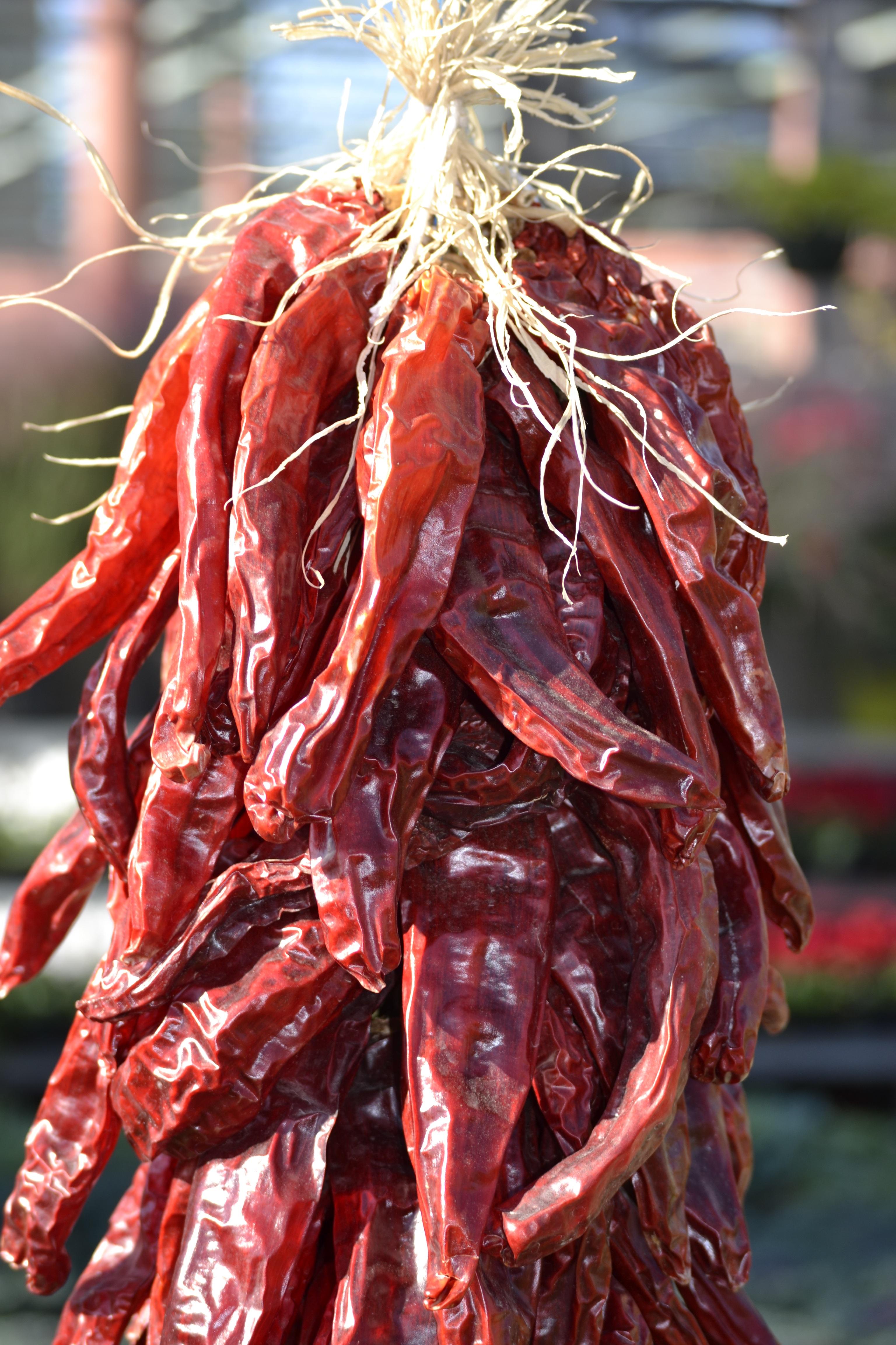 Chili Bilder kostenlose foto frucht blume lebensmittel würzen rot