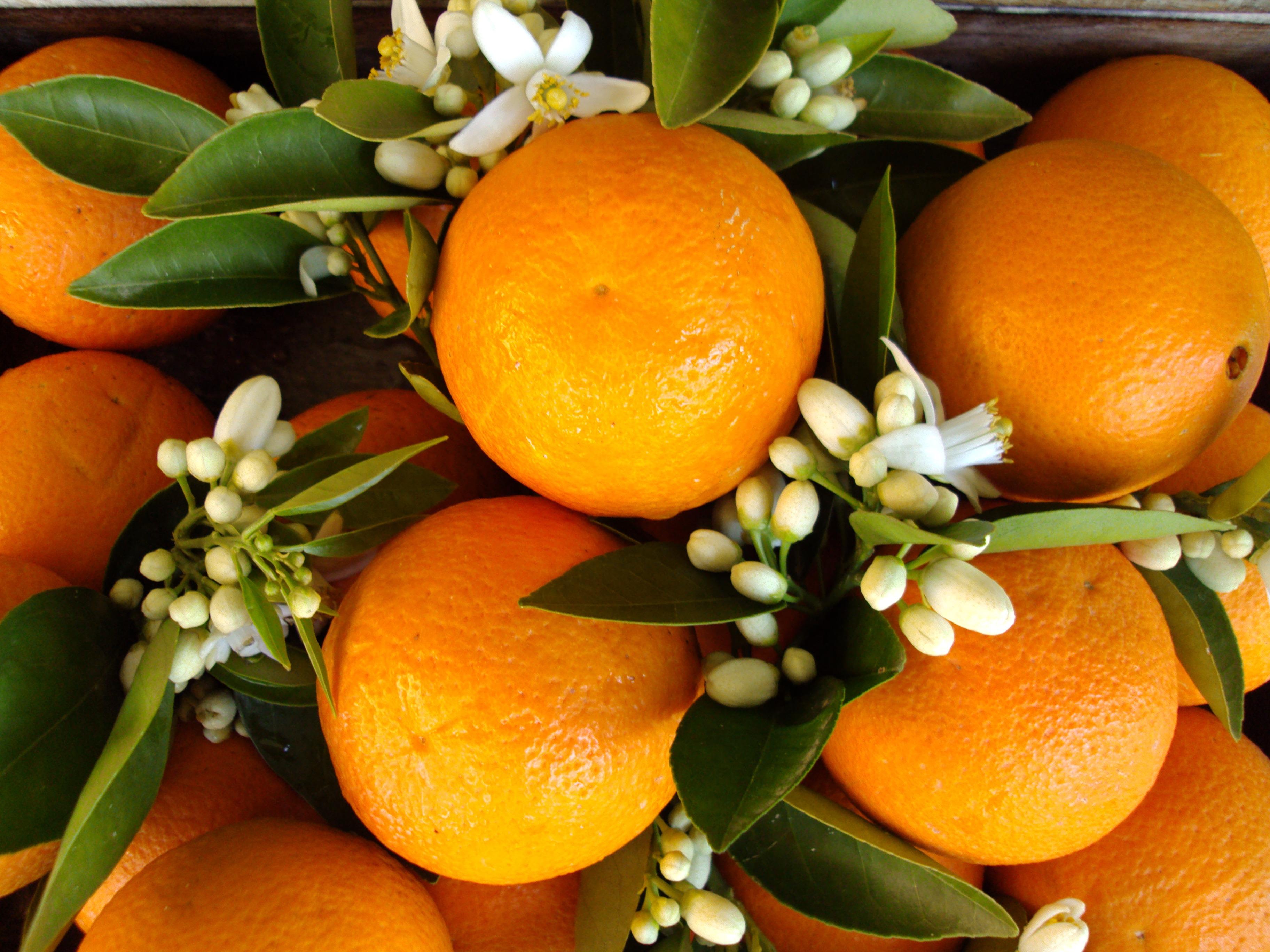 Апельсин Orange  № 2933073 загрузить
