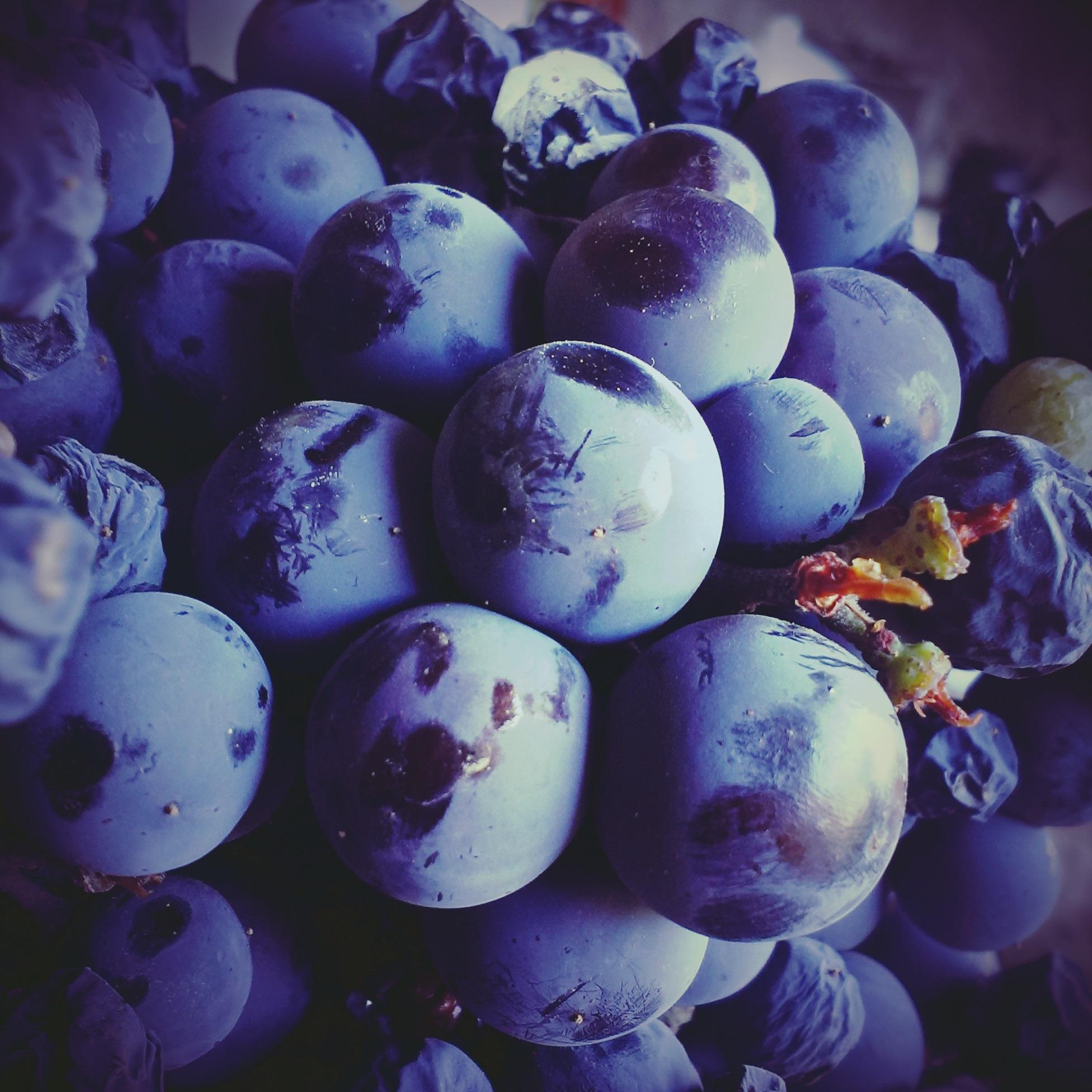 фиолетовые фрукты фото старого города