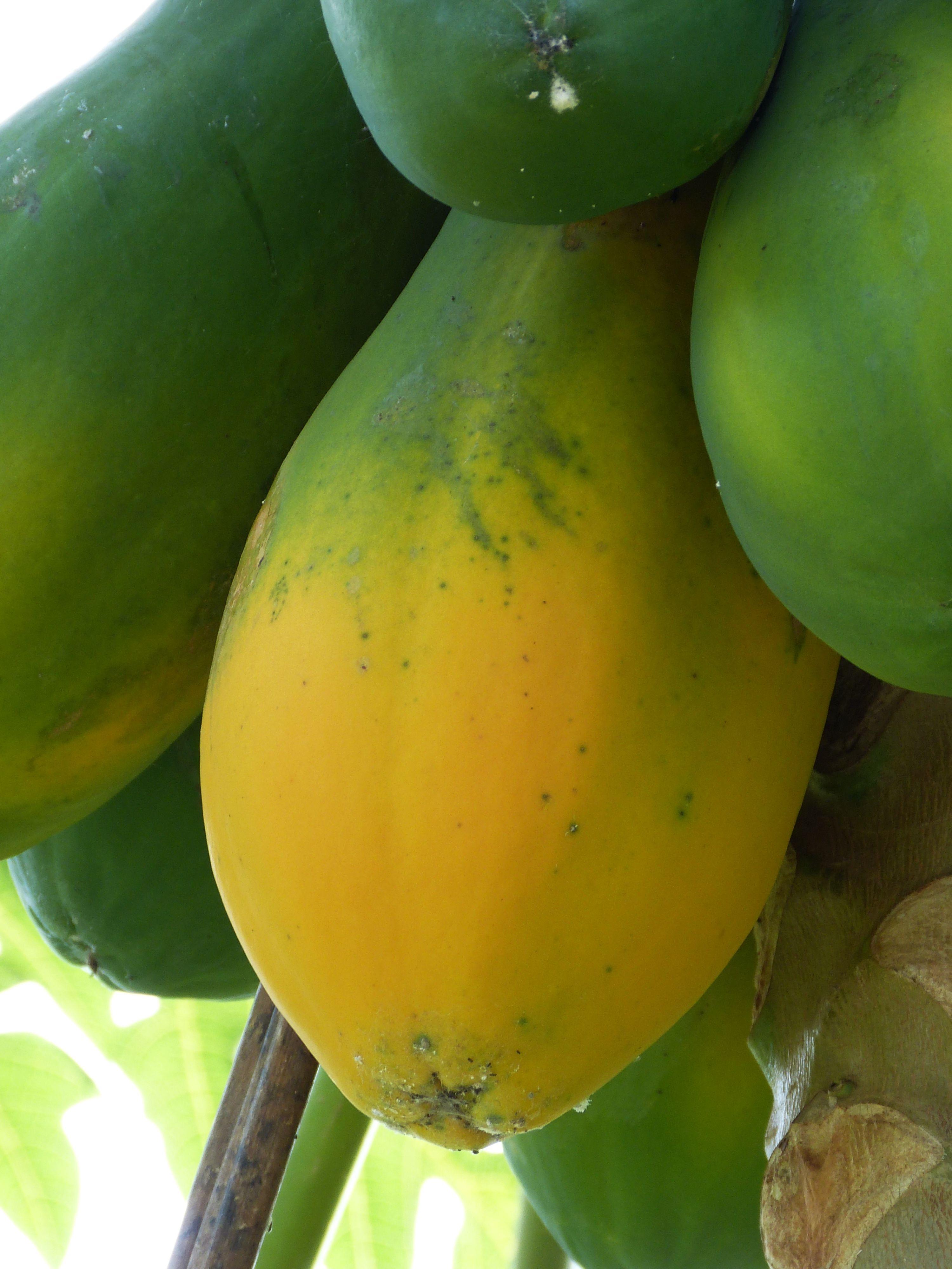 Papaya Hangi Vitaminleri İçerir