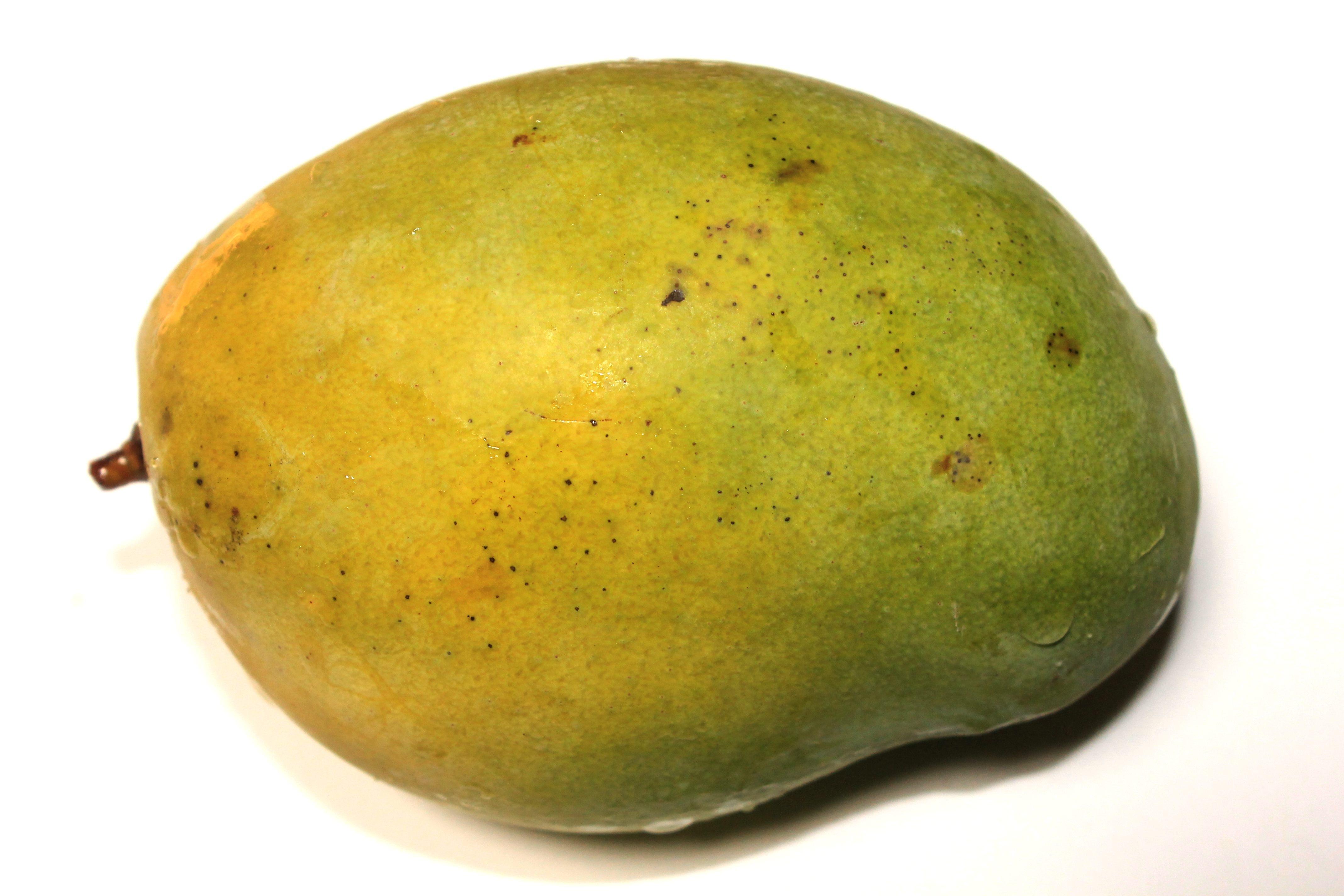 Mango Kasvi