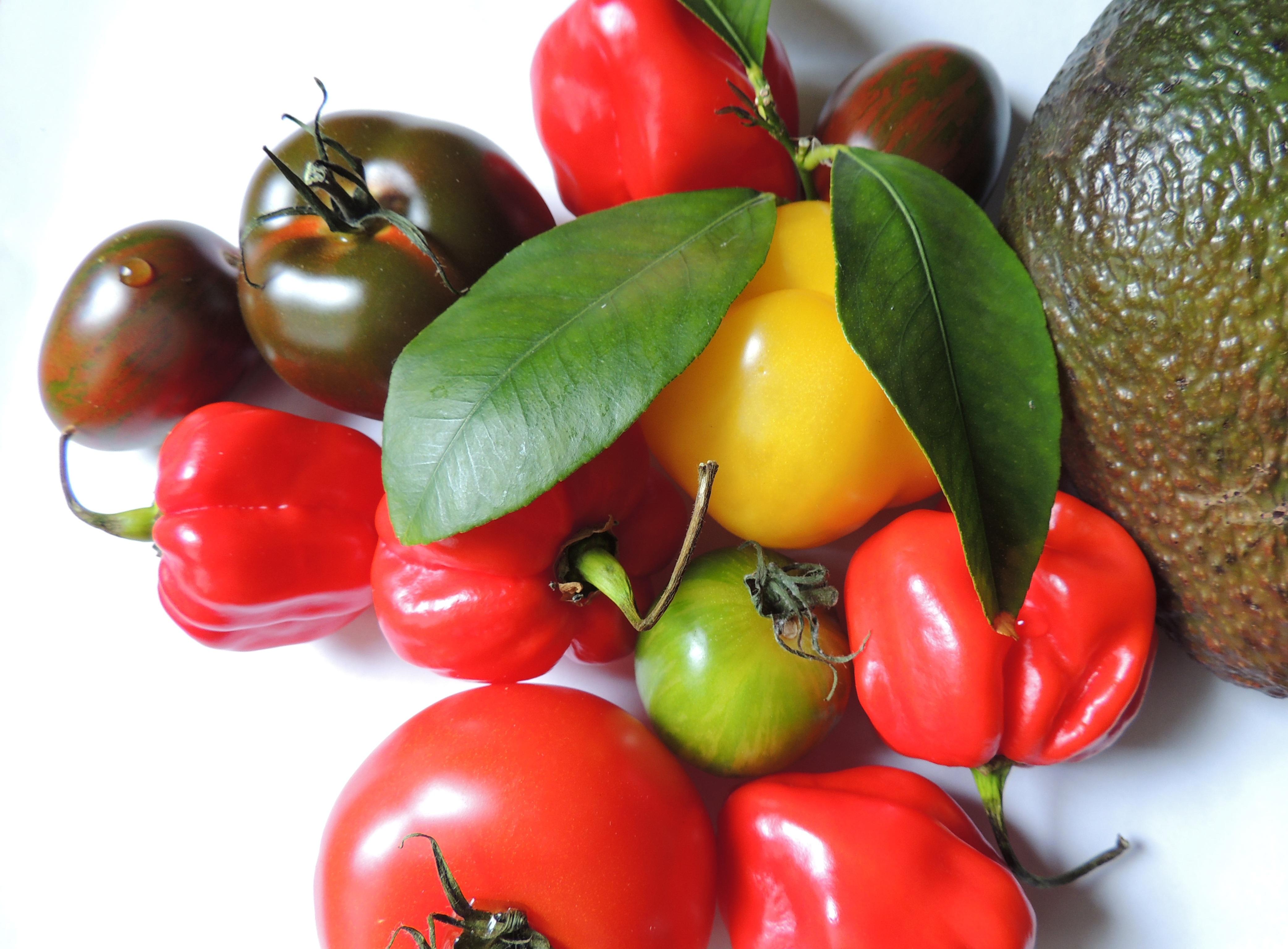 Plante avocat photo germer avocat partie nombre de fruits exotiques contiennent un noyau ou - Comment faire germer des graines de tomates ...