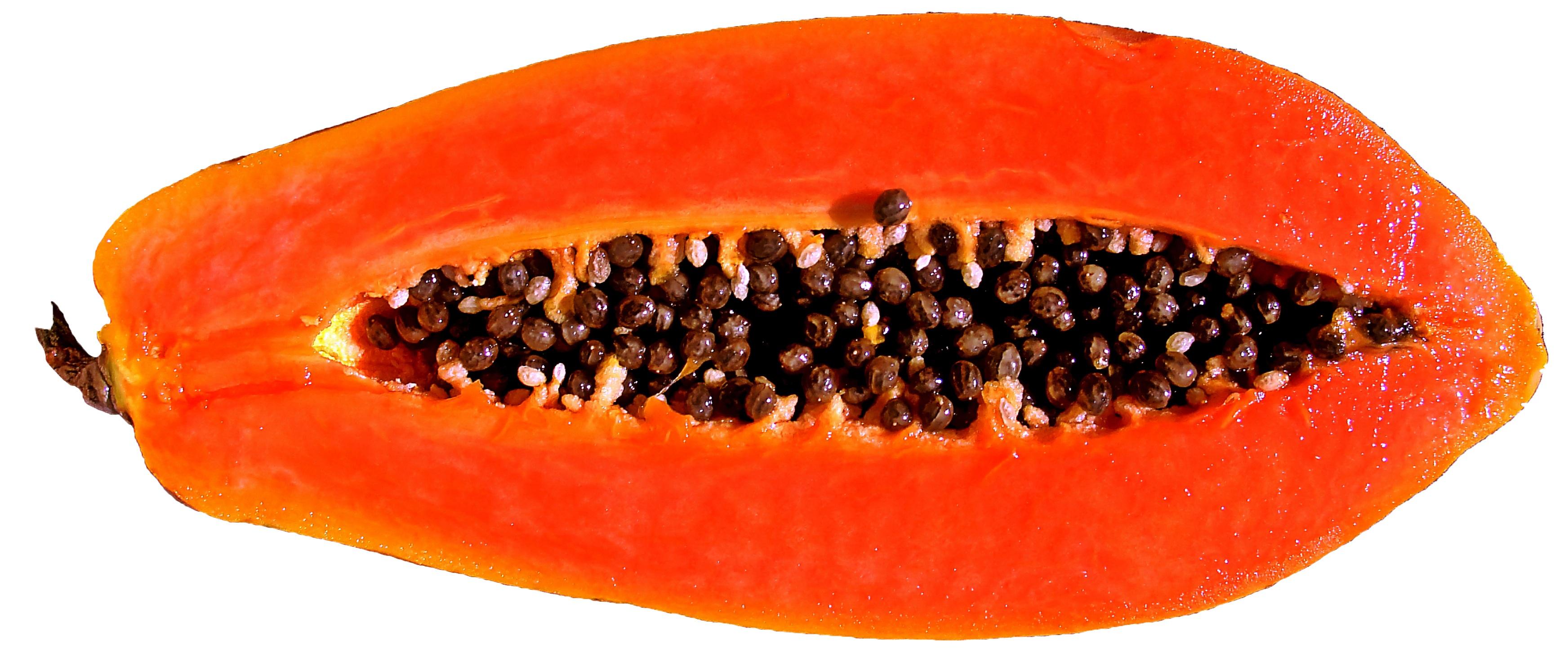 papaya png - HD3488×1483