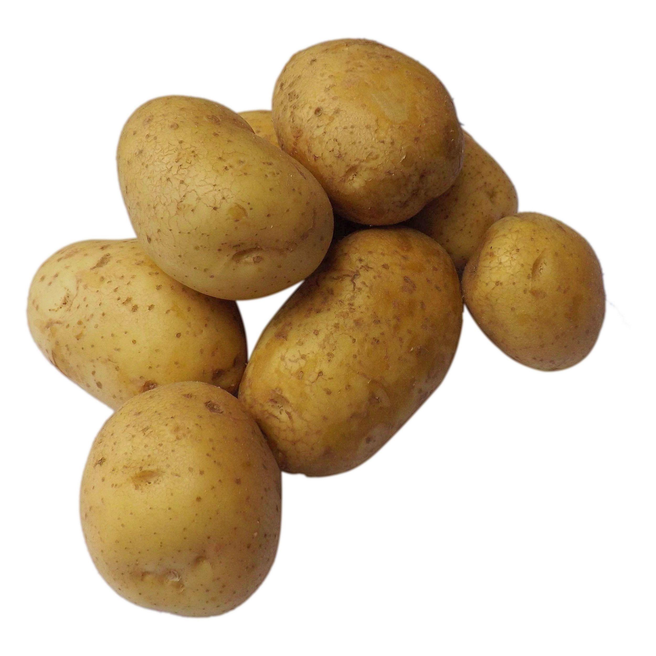 is potato a root