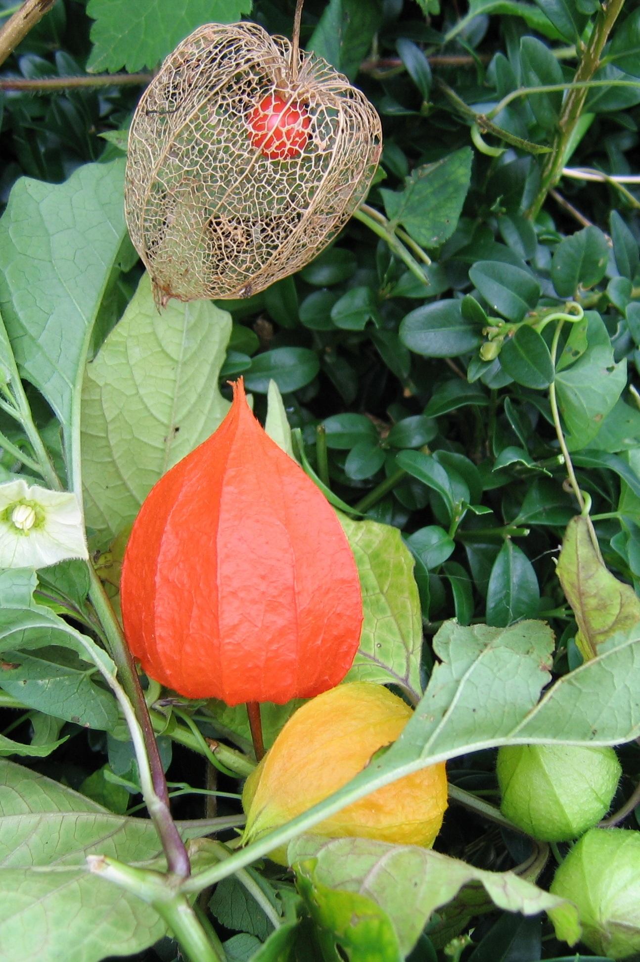 Fotos gratis : Fruta, hoja, flor, vaso, naranja, comida, Produce ...
