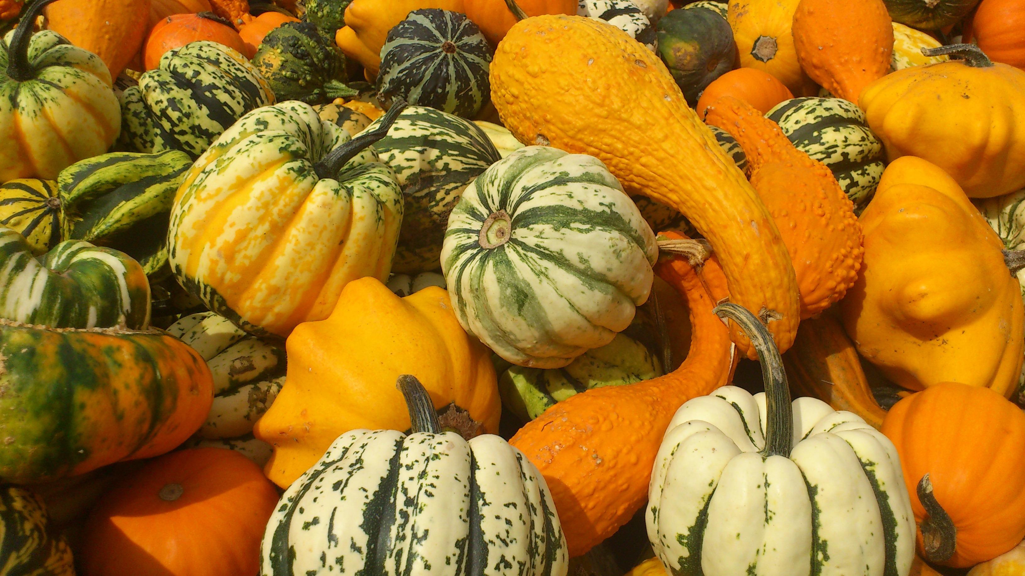 Kürbis Bilder Kostenlos kostenlose foto frucht orange lebensmittel ernte produzieren