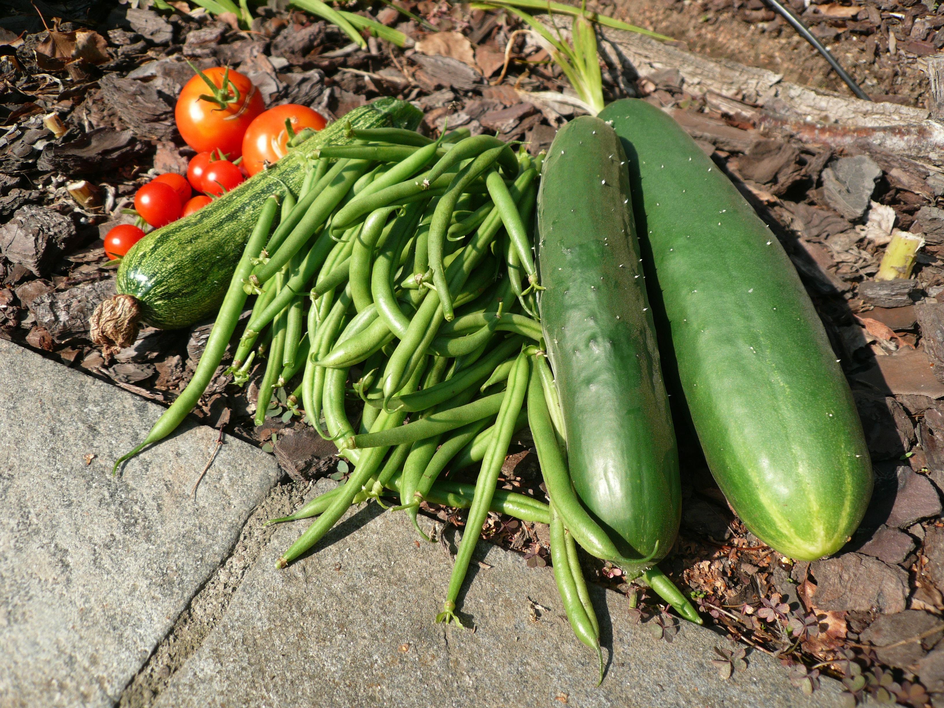 planta fruta produce vegetal vegetales pepino tomates vegetariano alimentos naturales cucumis comida local mercanca judas verdes public domain