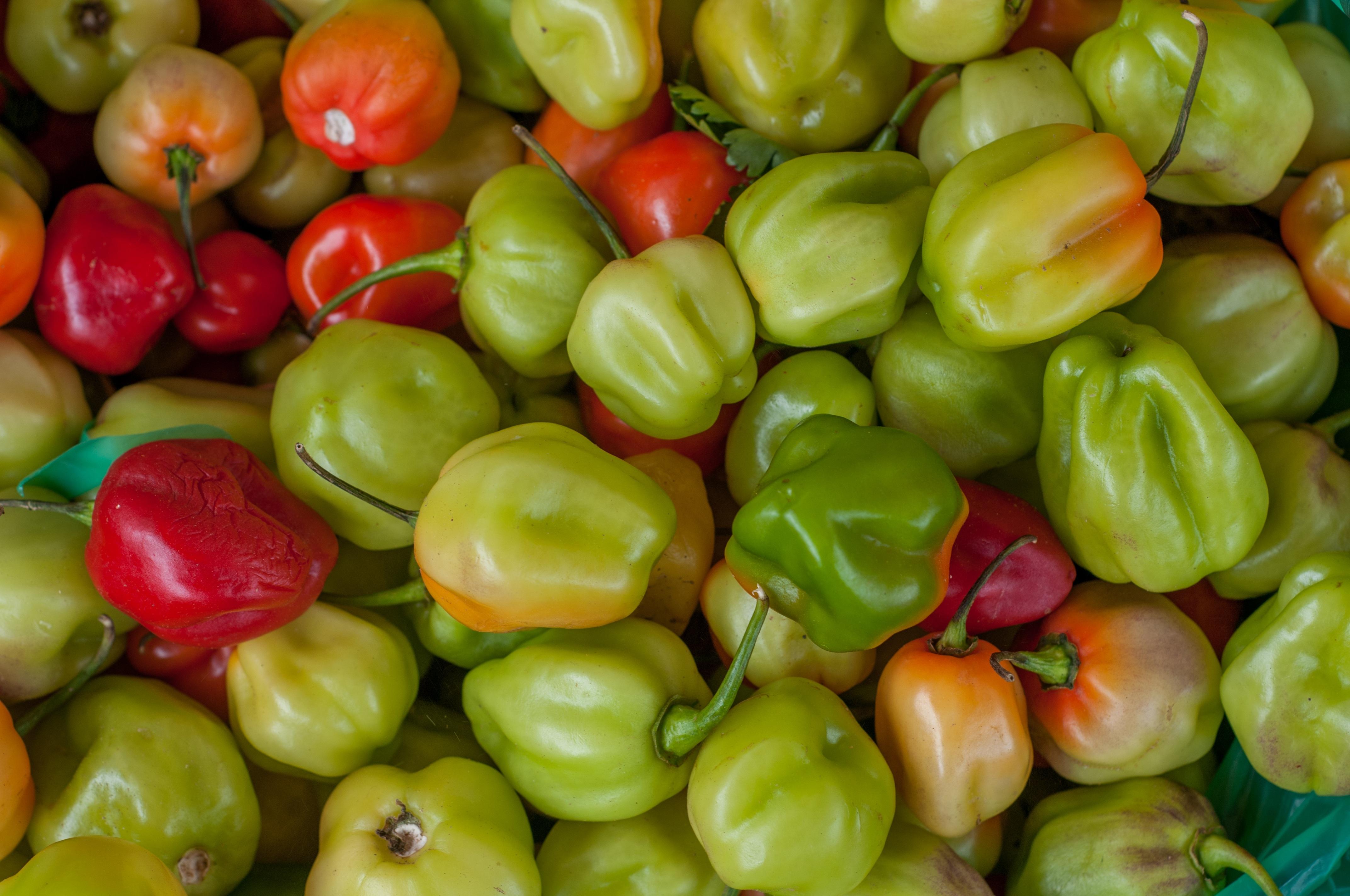 Fotos gratis : Fruta, maduro, comida, verde, chile, rojo, cocina ...