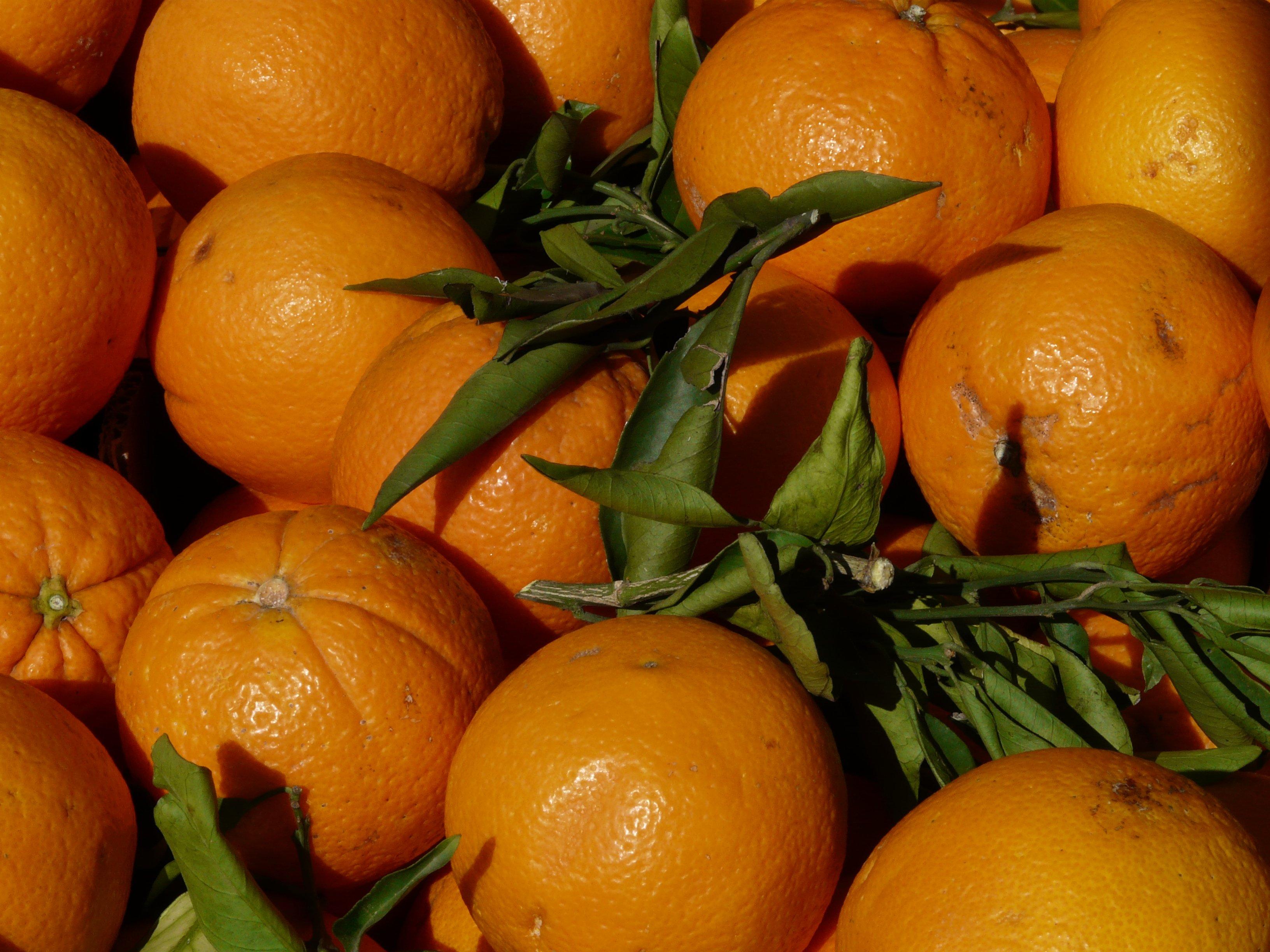 Картинки апельсинов фото