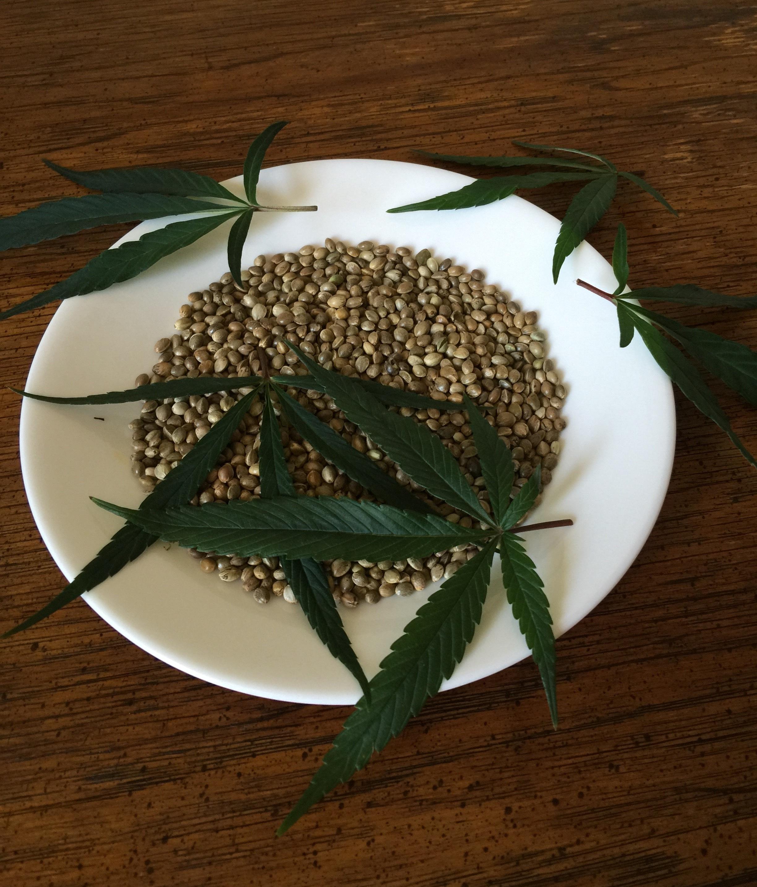 Конопля готовка варадеро купить марихуану
