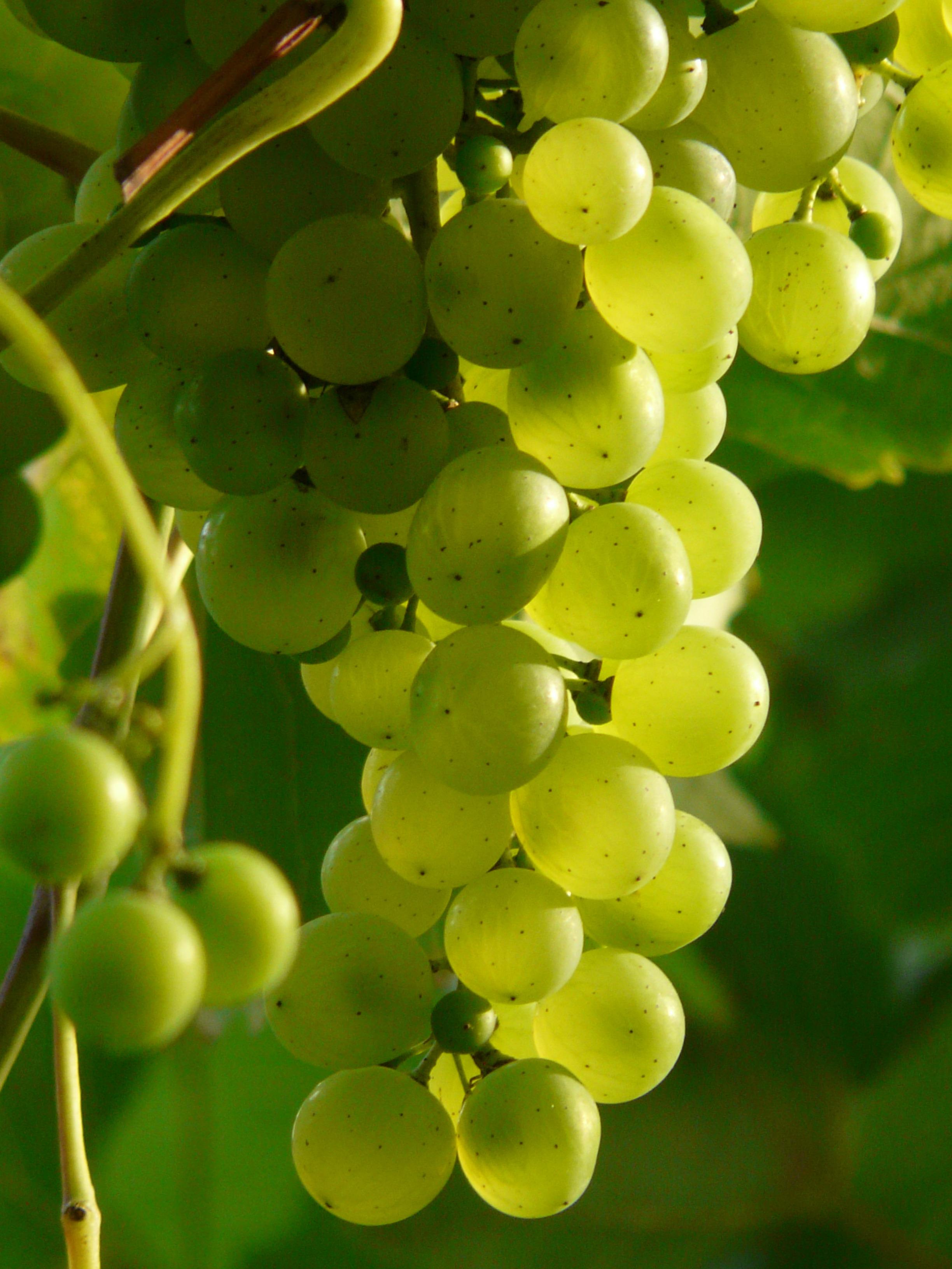 grape-2s