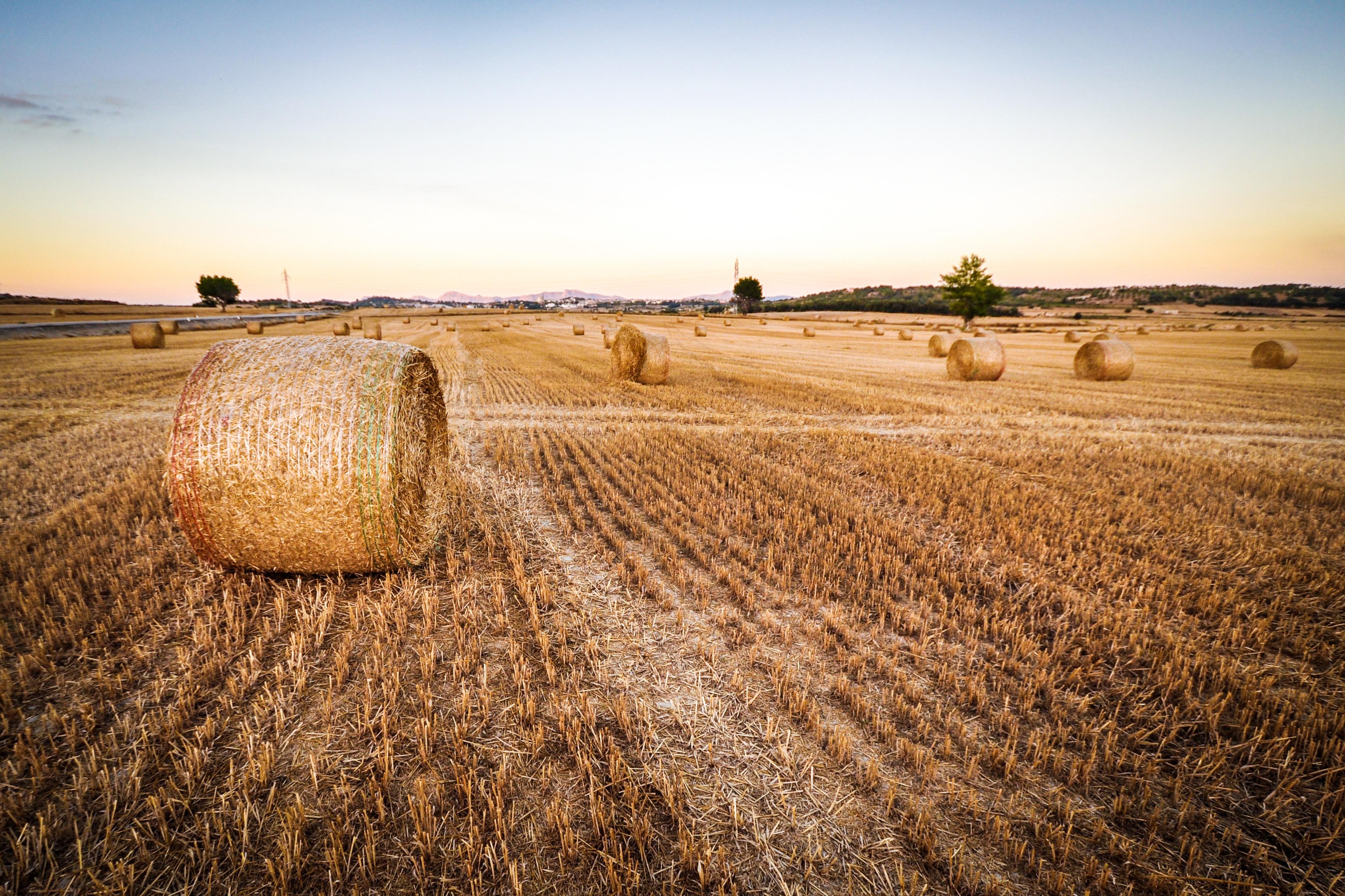 Картинки сельского хозяйства