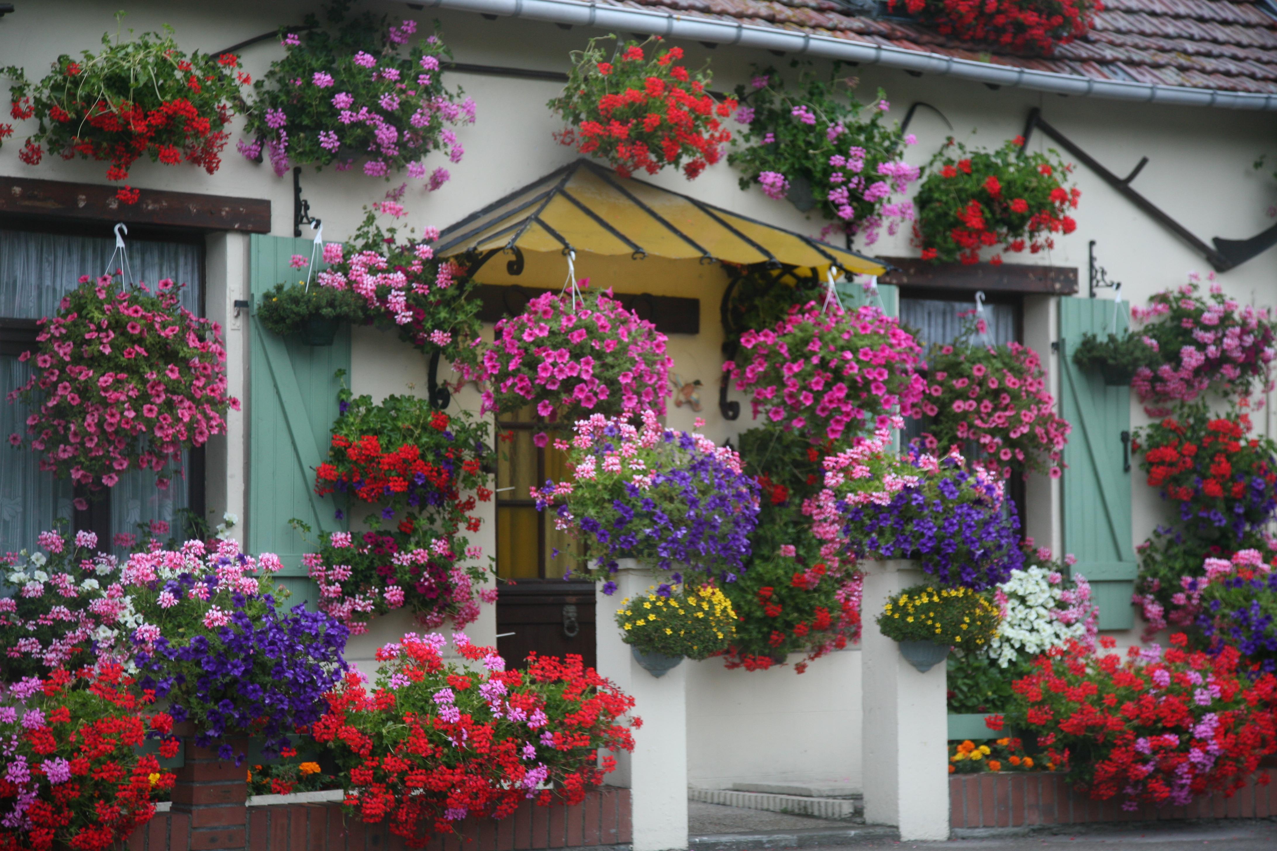 картинки цветочного домашних борьба кубе
