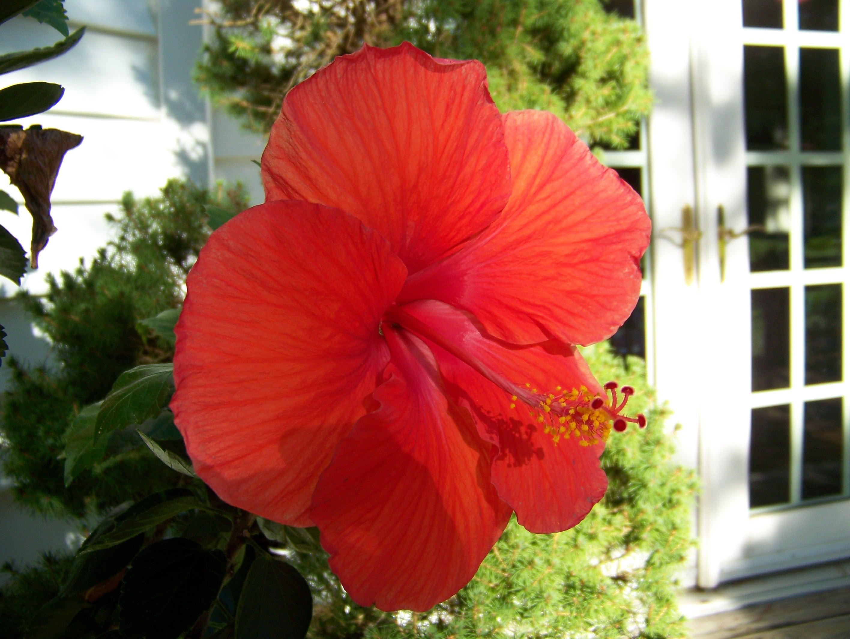 Gratuites maison lumi¨re du soleil fleur pétale