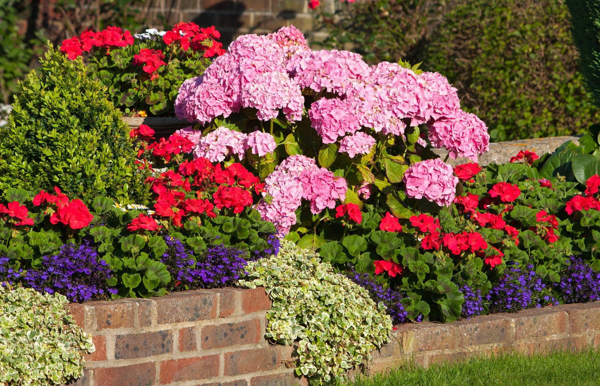 Fotos gratis c sped flor floral rojo bot nica azul for Arbol rojo jardin