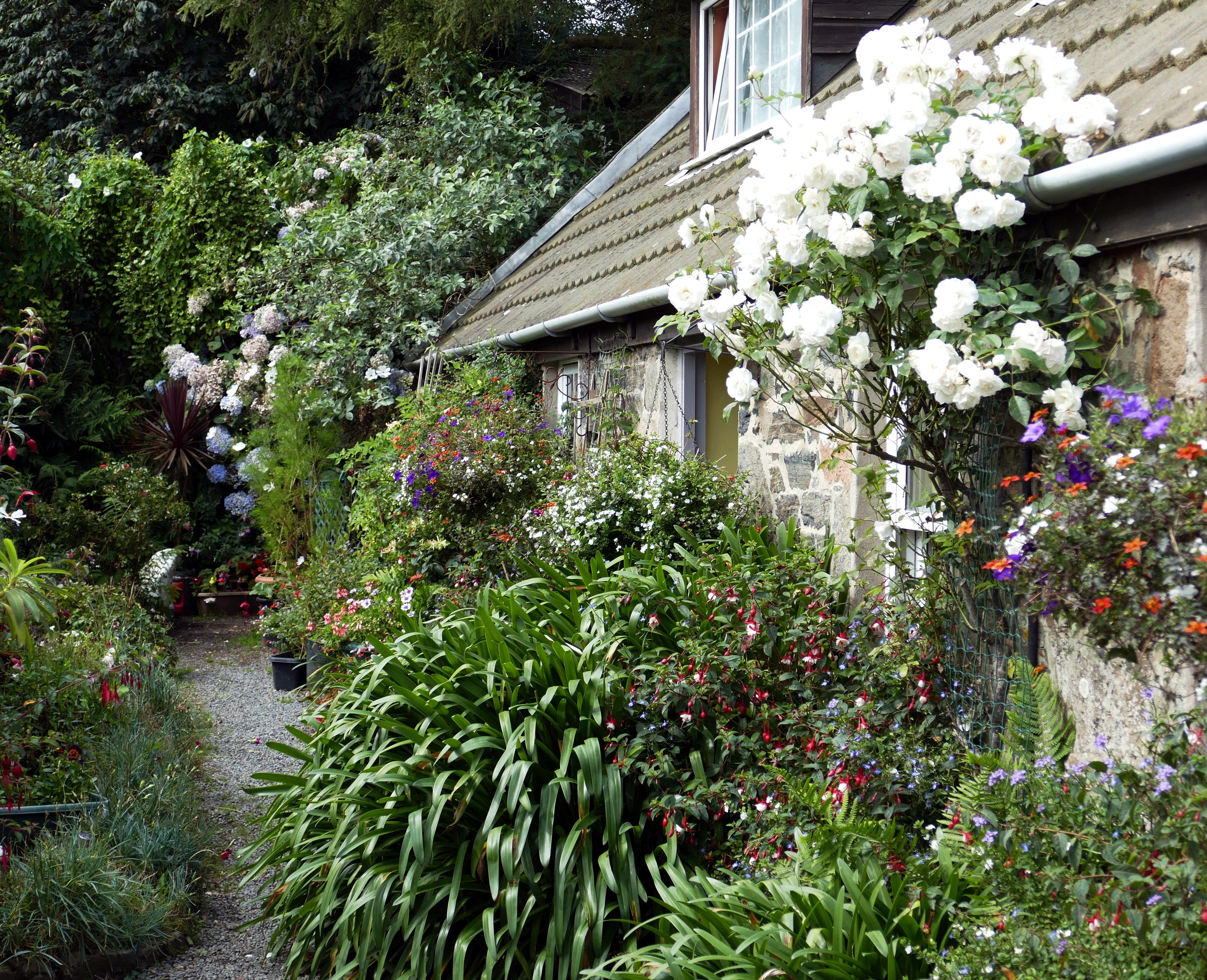 Gratis billeder plante gr spl ne blomst hjem for Garden design jersey channel islands