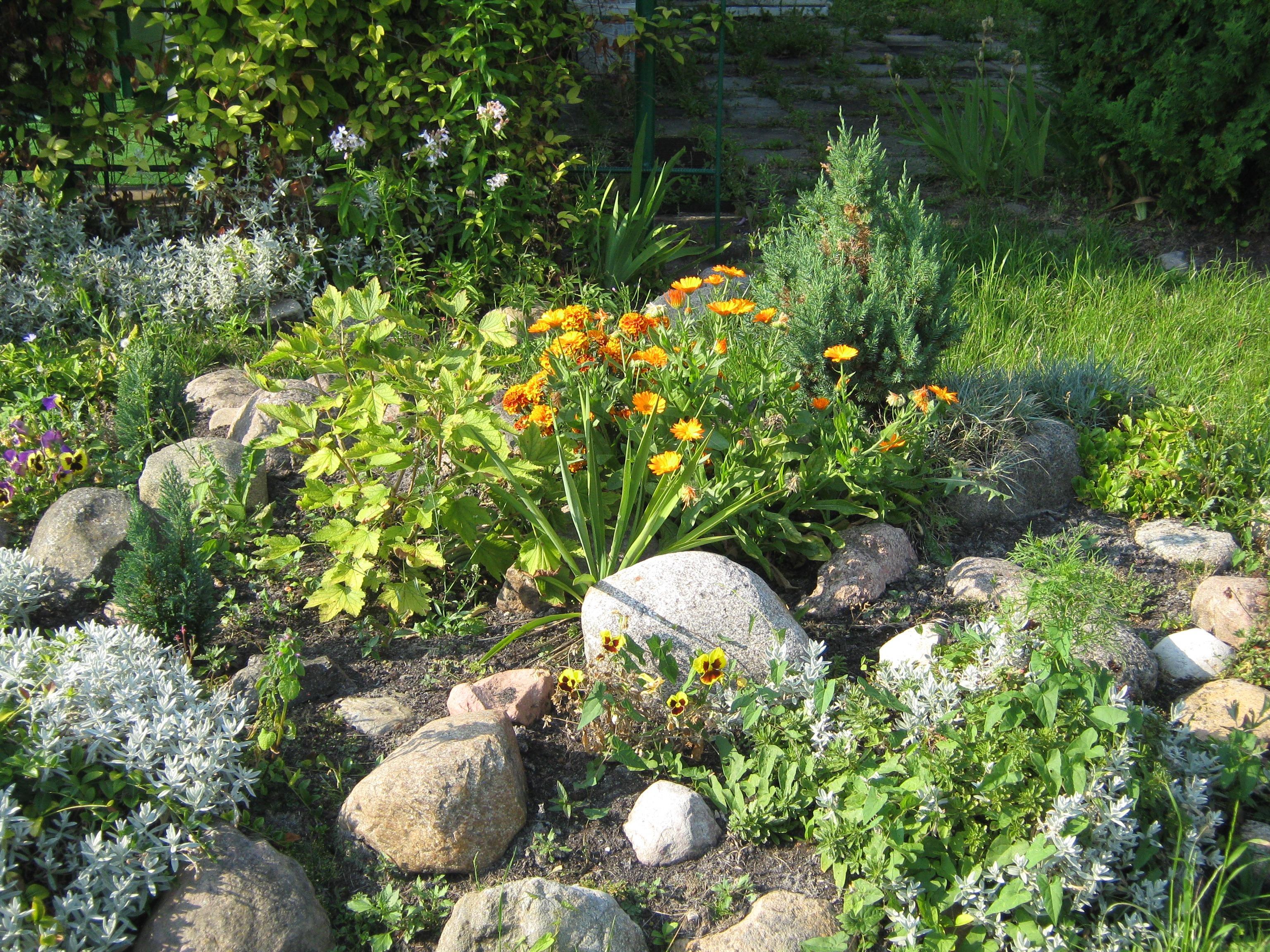 free images lawn flower pond stream backyard botany flora