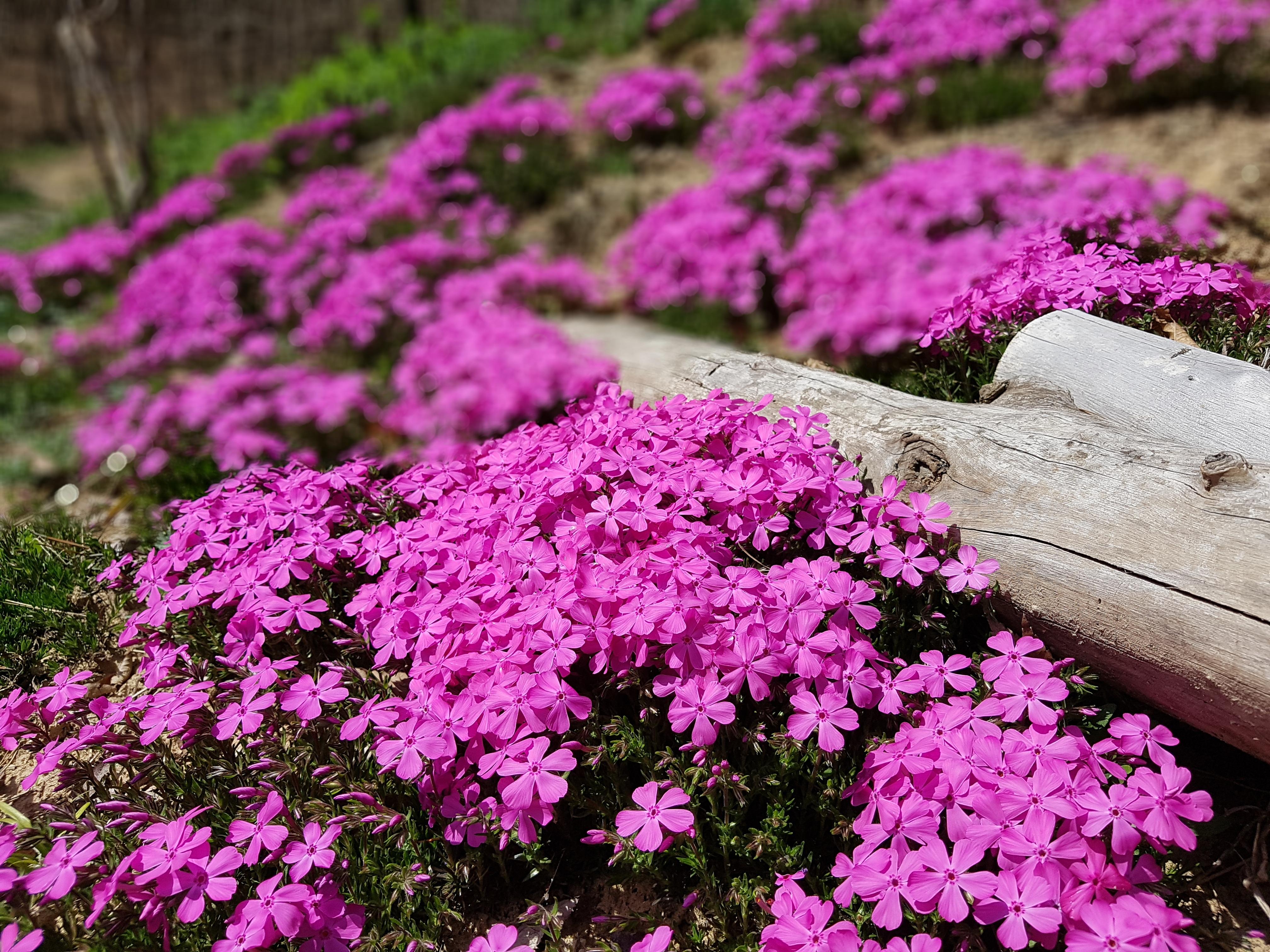 Free Images Lawn Botany Garden Flora Shrub Groundcover