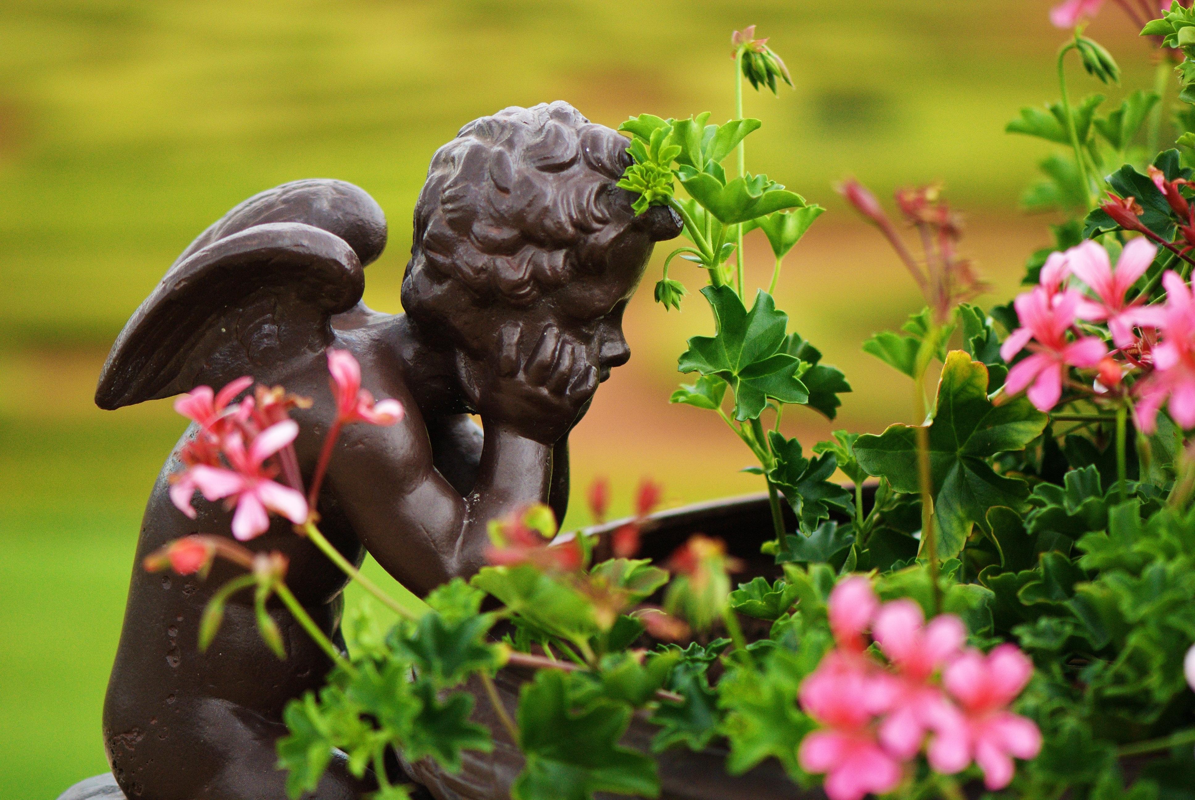 Banco de imagens plantar gramado flor pensando for Immagini buongiorno il mio piccolo mondo segreto