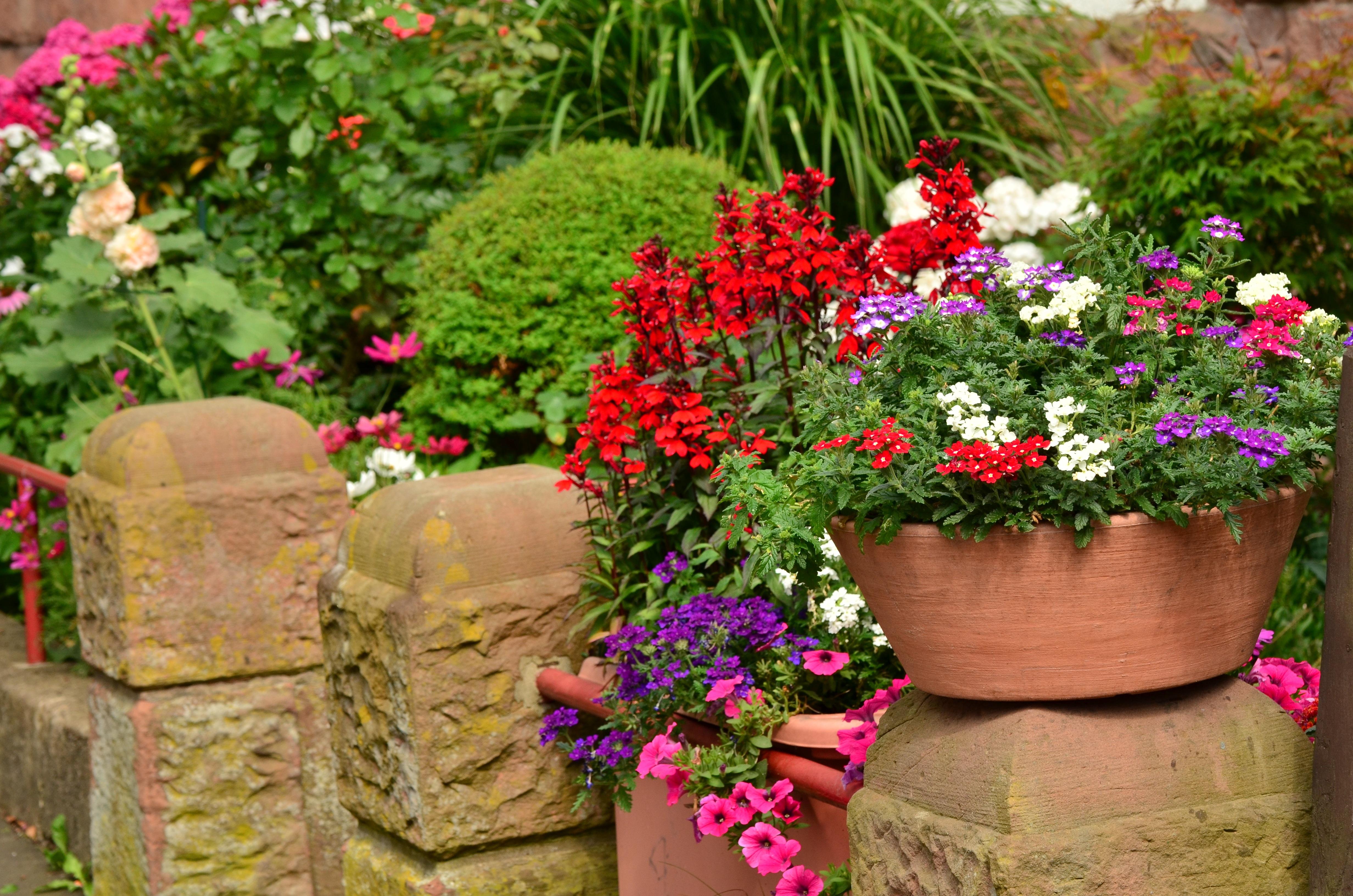 Двор в цветах фото и описание