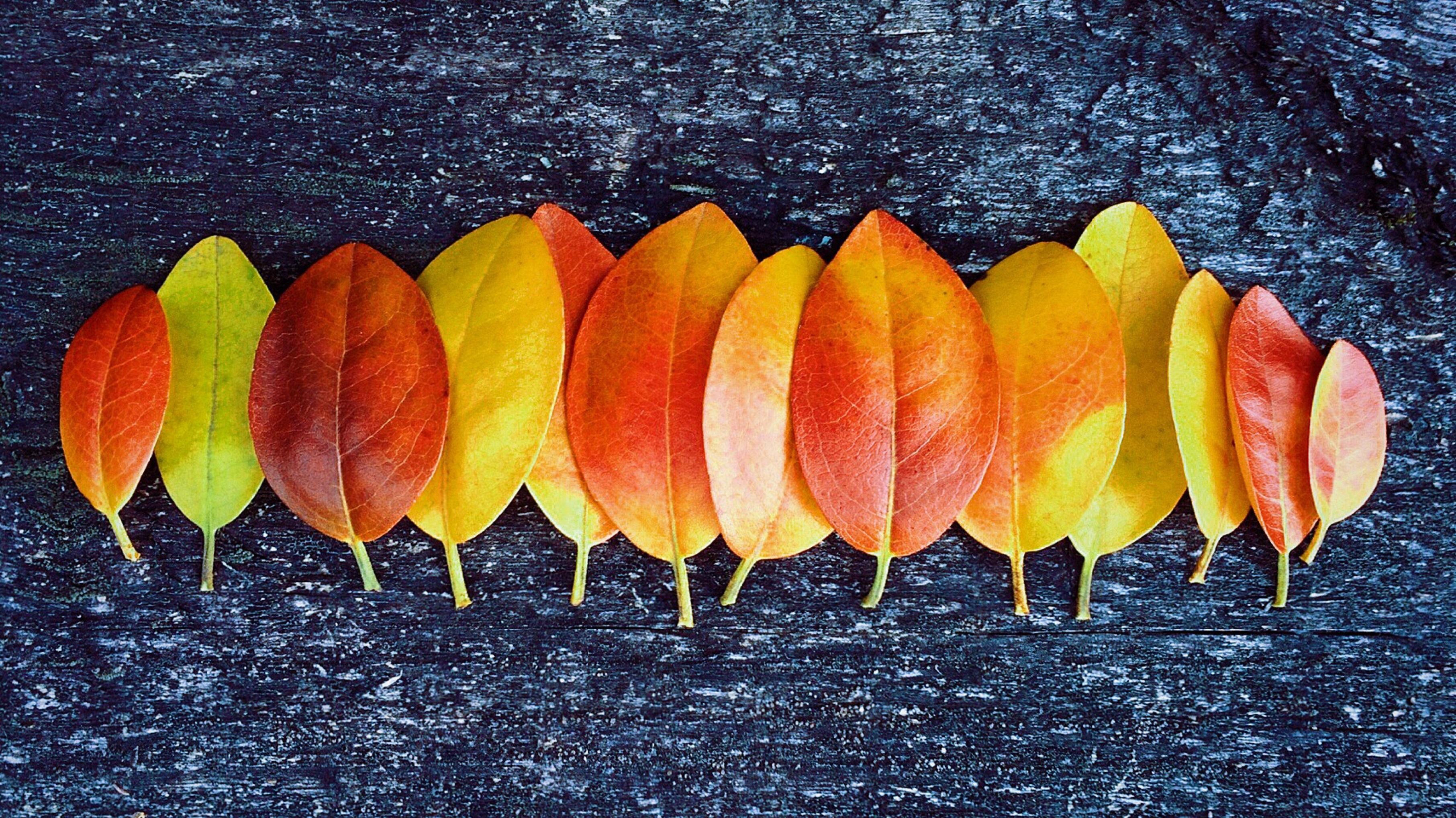 Fotos gratis : hoja, otoño, flor, pétalo, comida, Produce, temporada ...