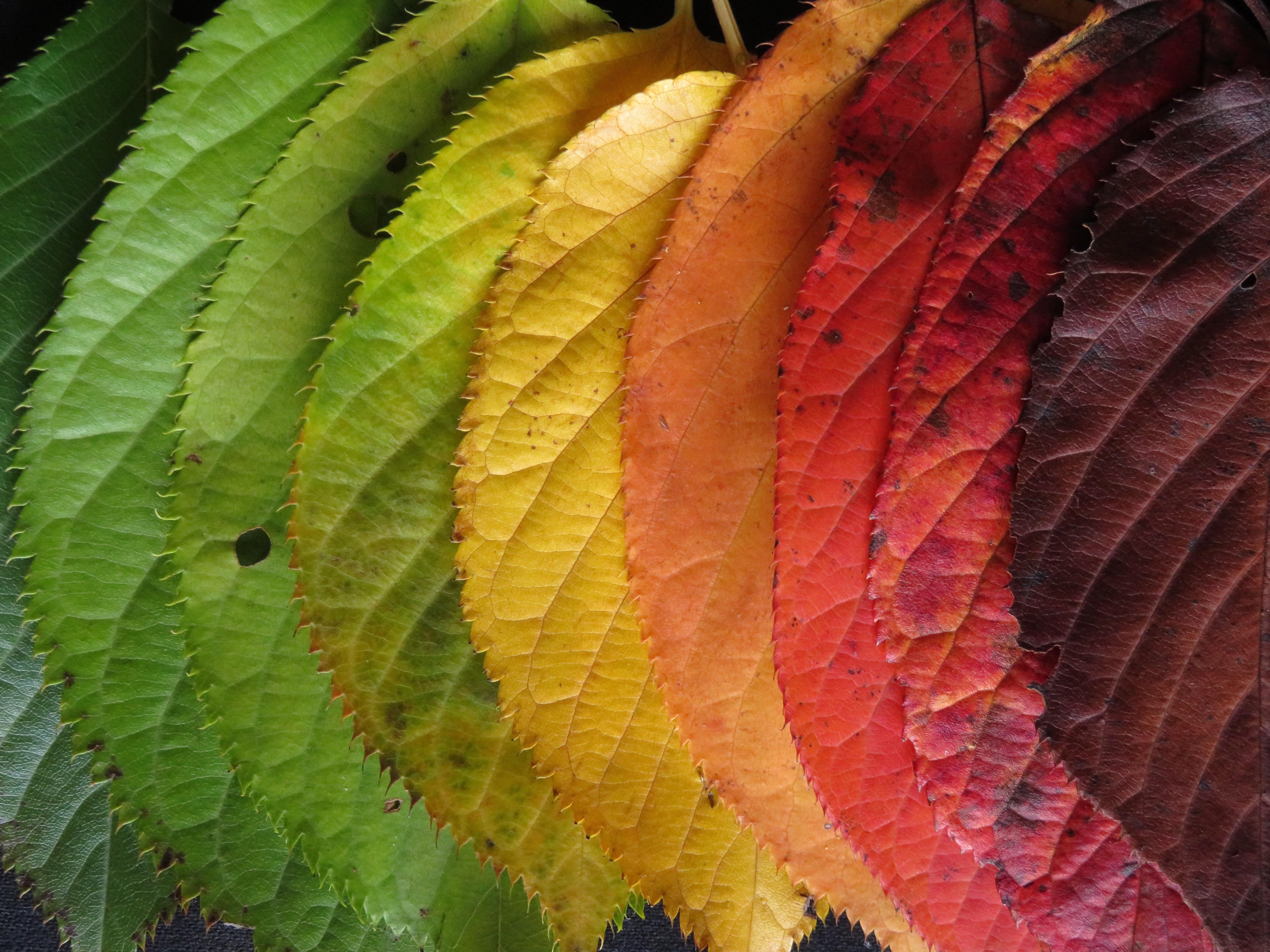Free Images Leaf Flower Produce Colourful Botany