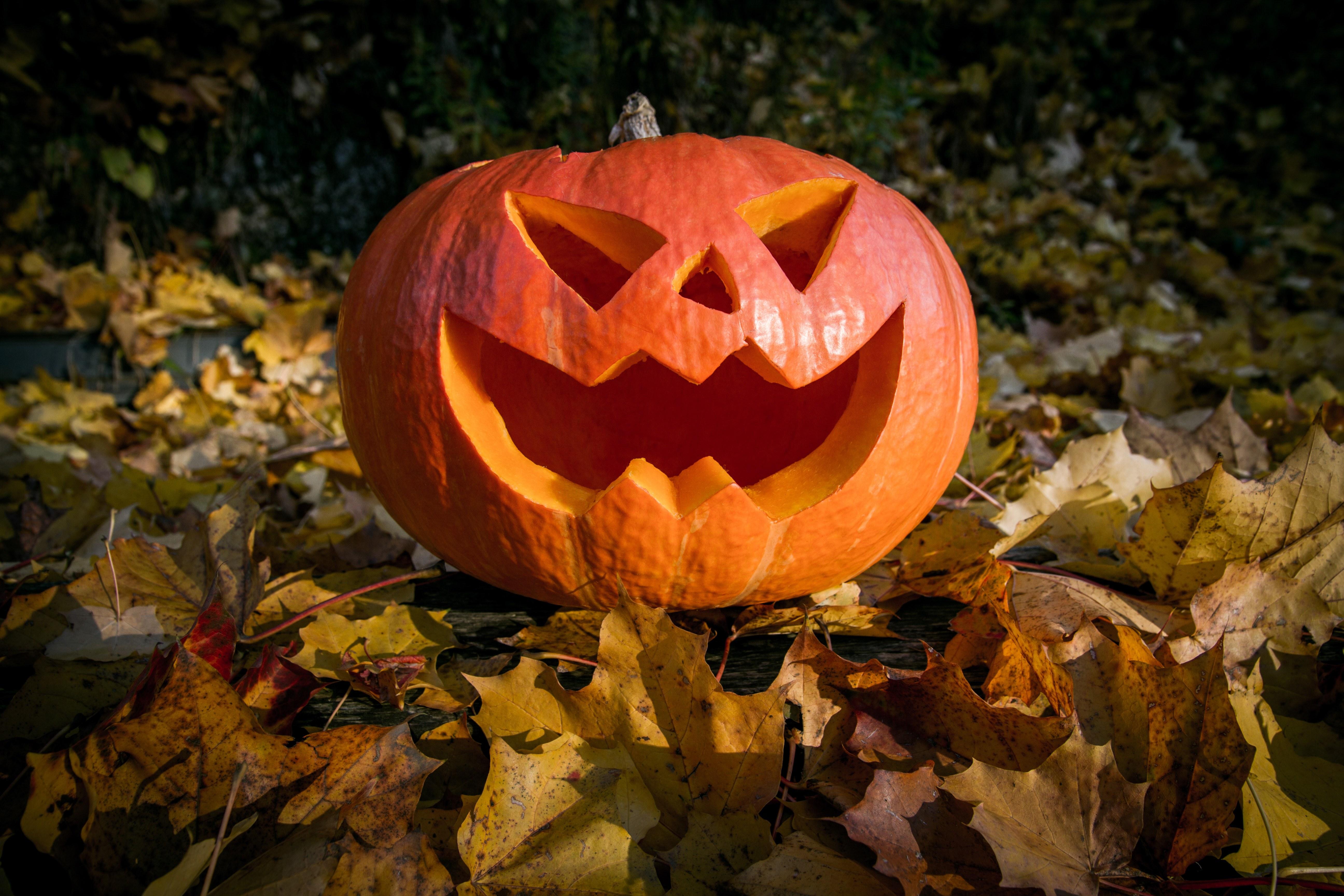 Free Images : leaf, fall, flower, spooky, orange, autumn ...