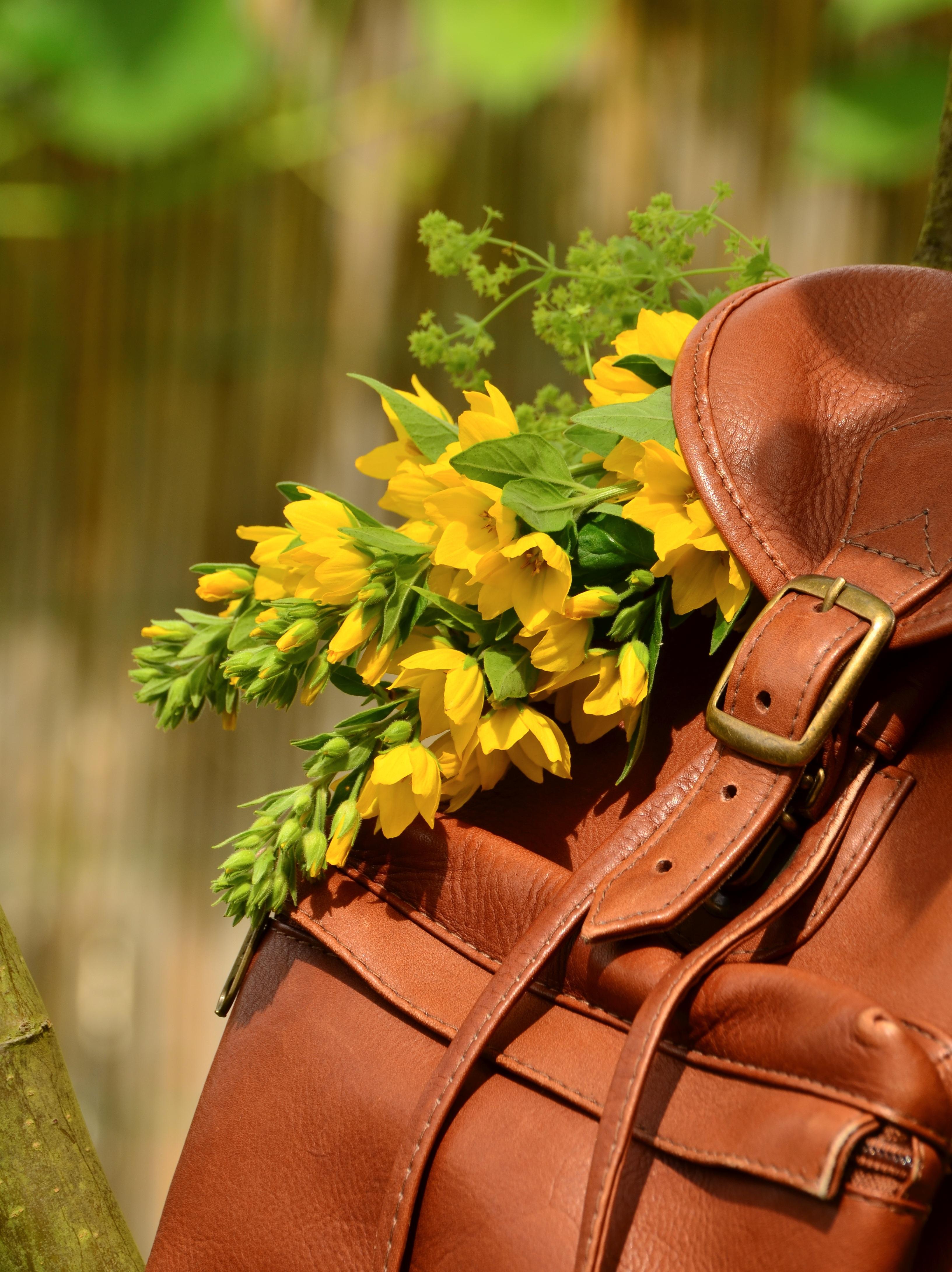 Free Images Plant Leaf Bloom Backpack Rustic Spring Green