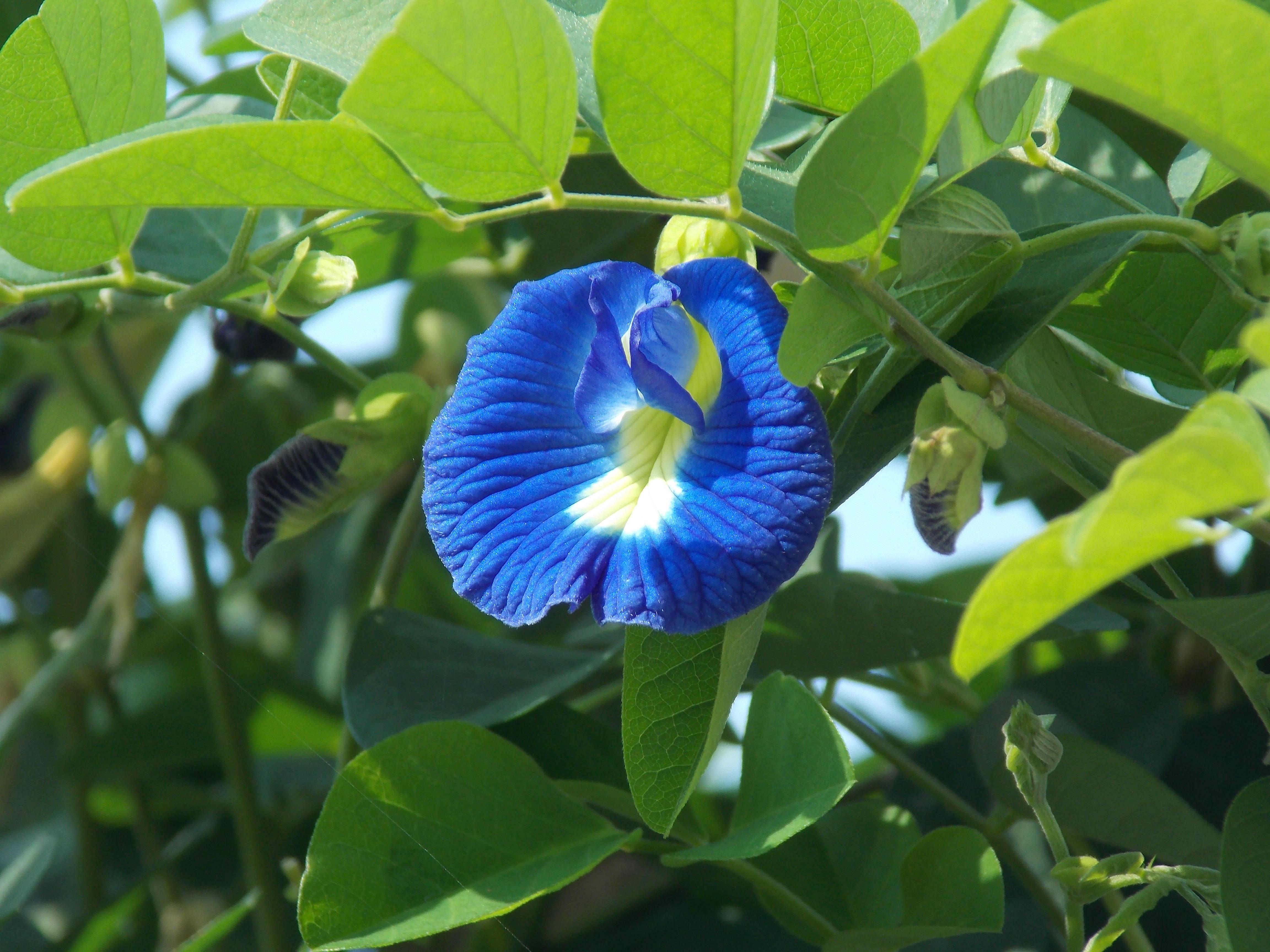 Free Images Leaf Flower Bloom Floral Foliage Spring Green