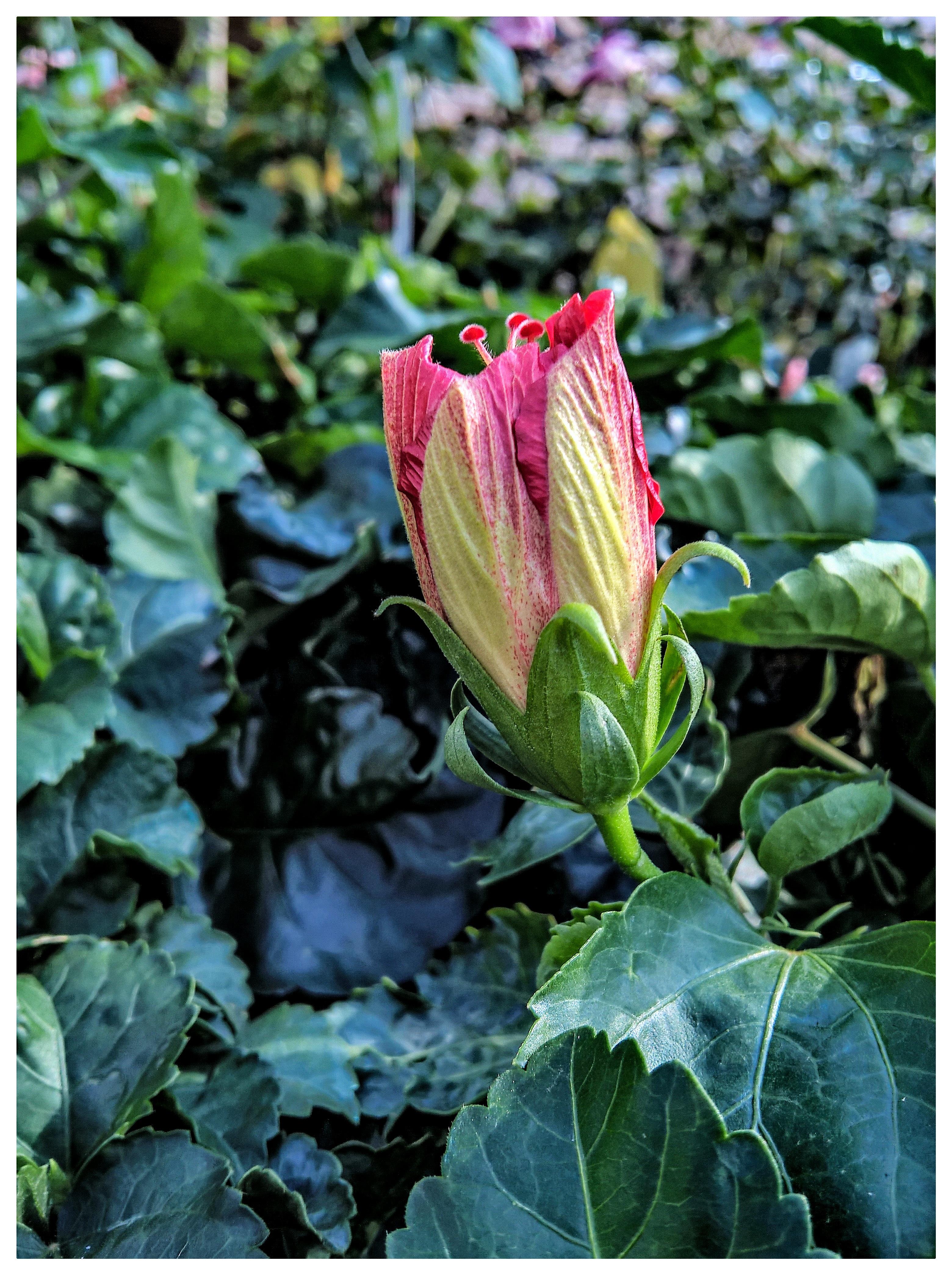 images gratuites : feuille, fleur, botanique, flore, arum, plante à