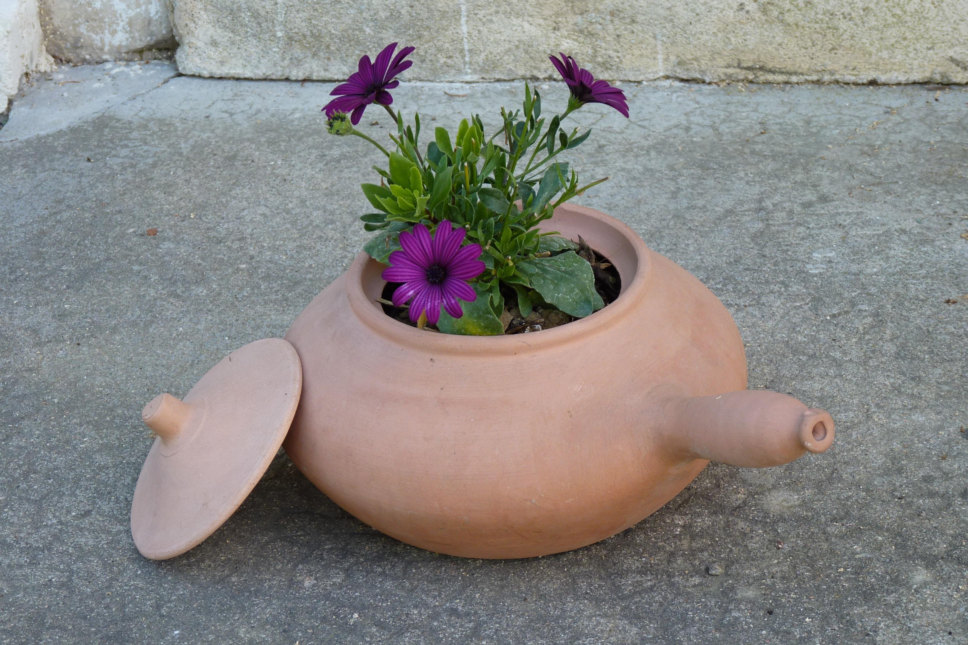 Free Images Plant Leaf Flower Ceramic Garden Flora