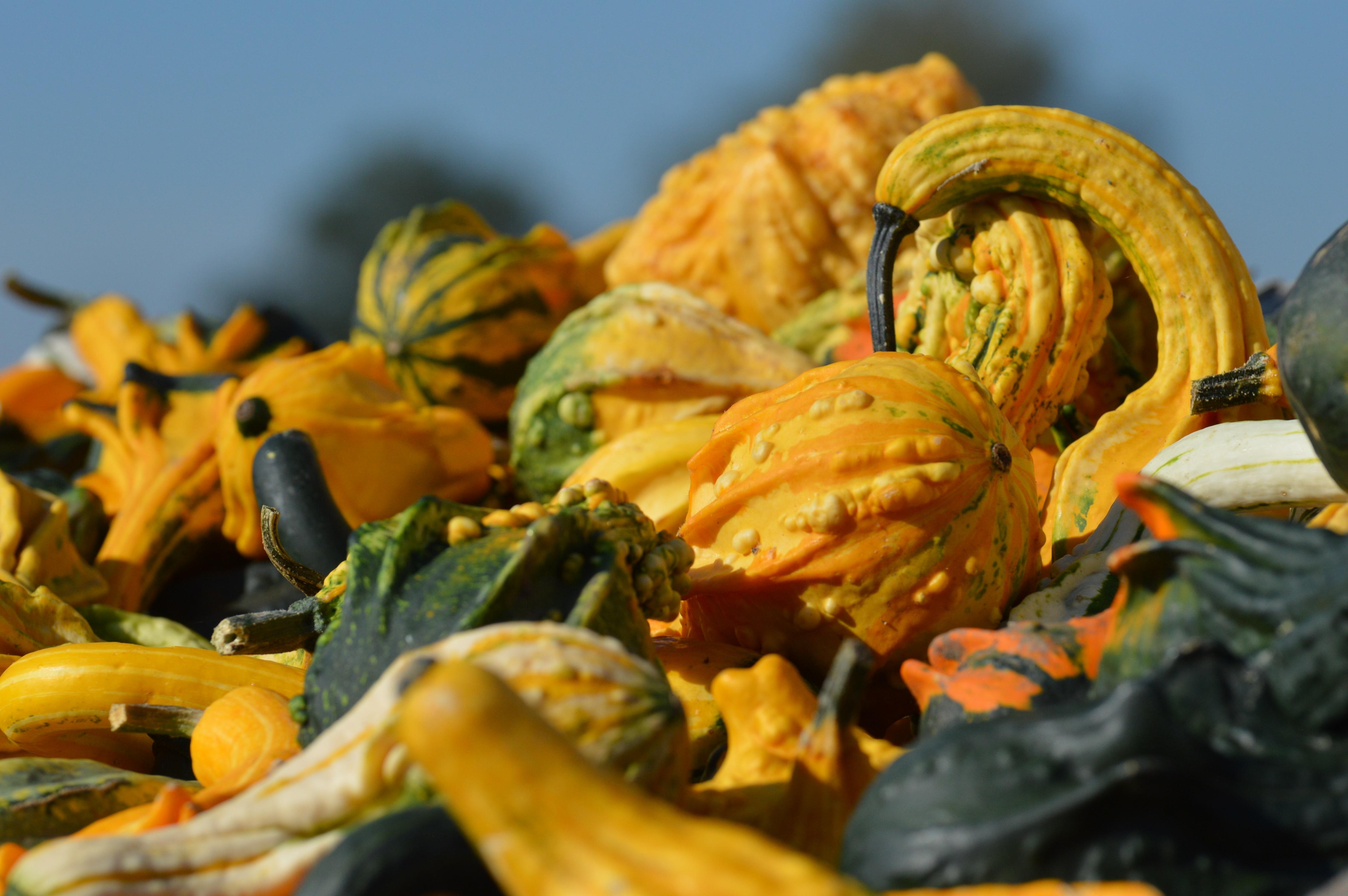 Gratis afbeeldingen : fabriek blad bloem schotel produceren