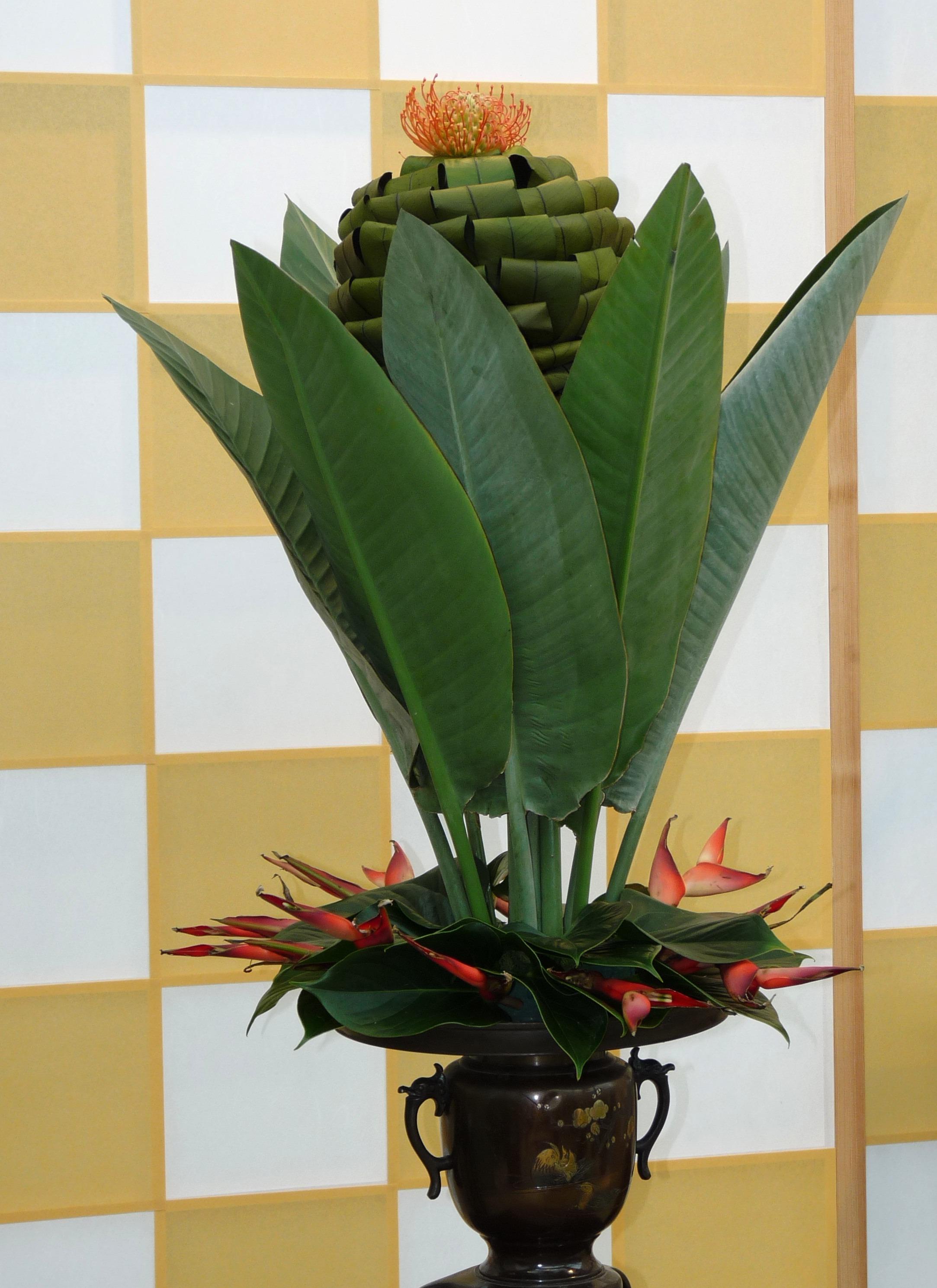 Images gratuites feuille d coration vert botanique jaune flore d co design d 39 int rieur - Pot design plante d interieur ...