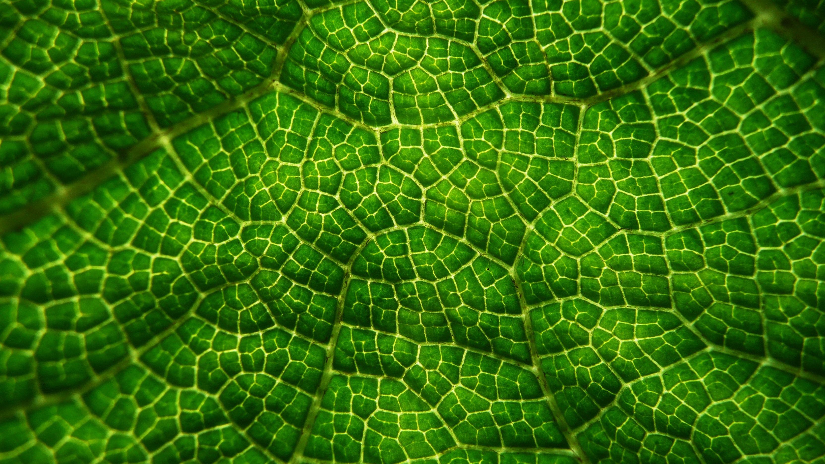 Fotos gratis hoja flor follaje patr n verde vistoso for Green pflanzen