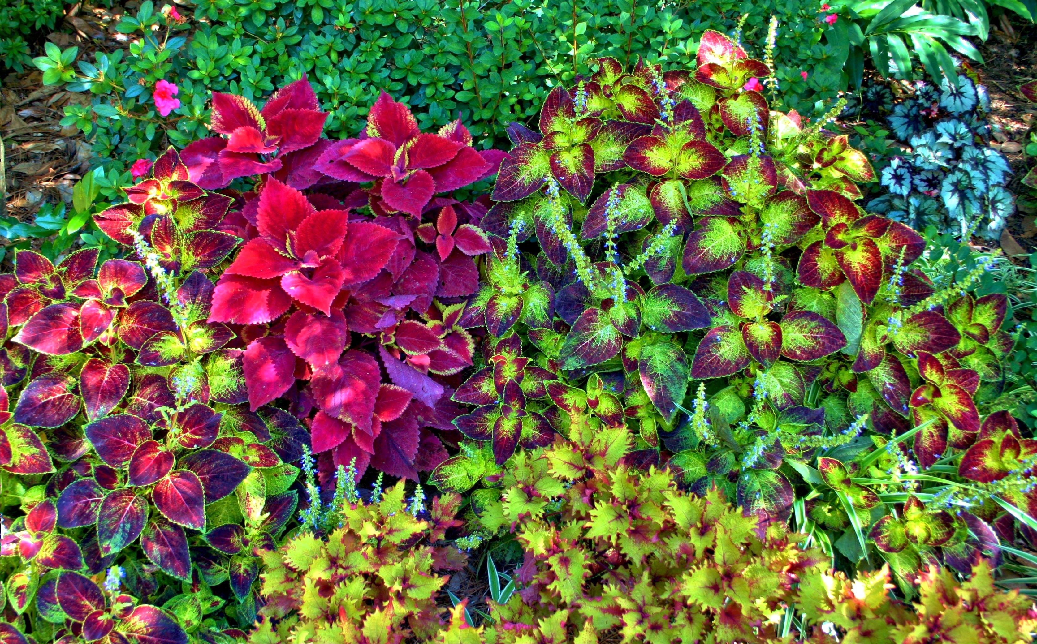 Fotos gratis hoja follaje peque a hojas perennes - Plantas de jardin ...