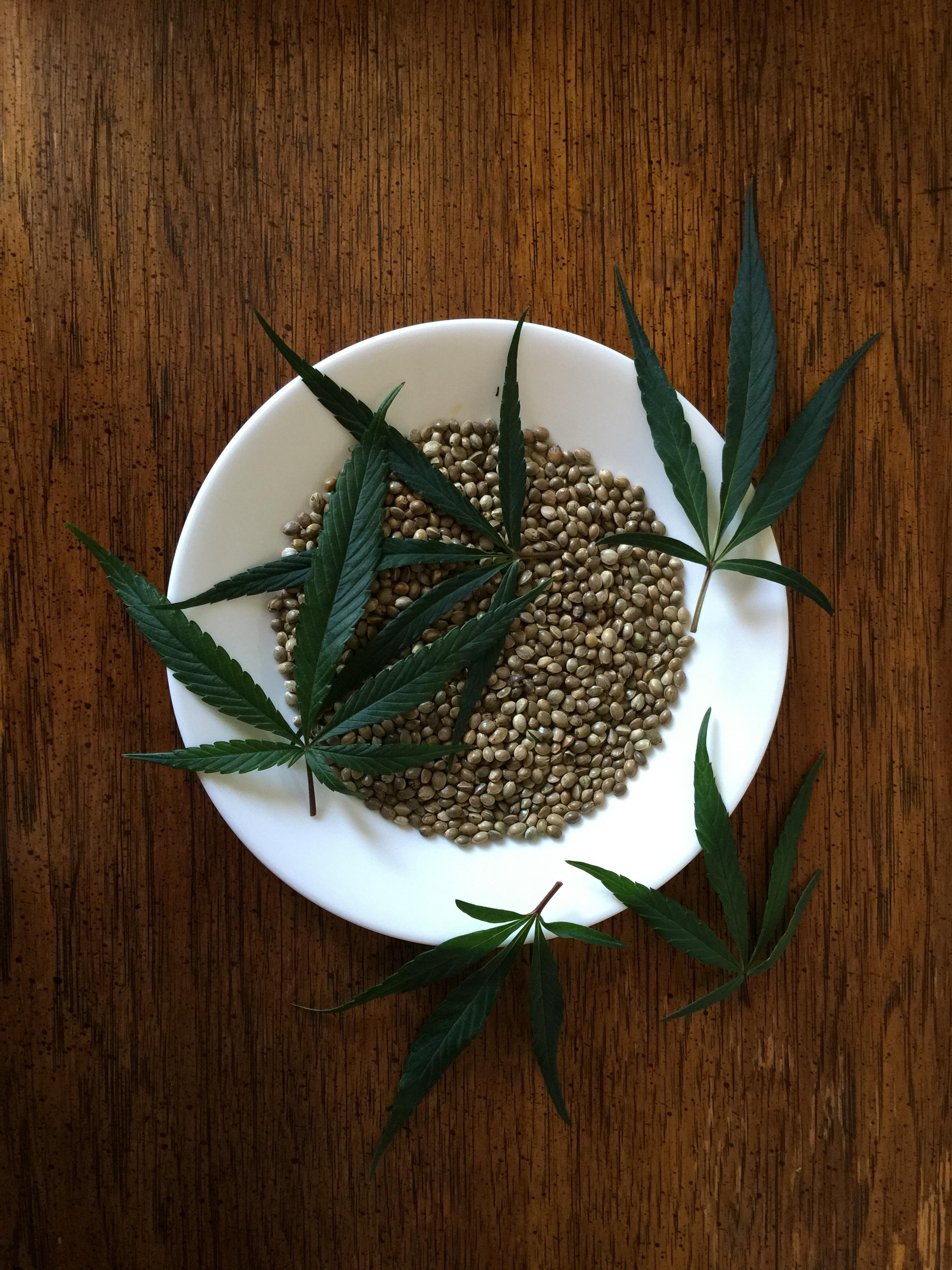 minecraft hemp seeds