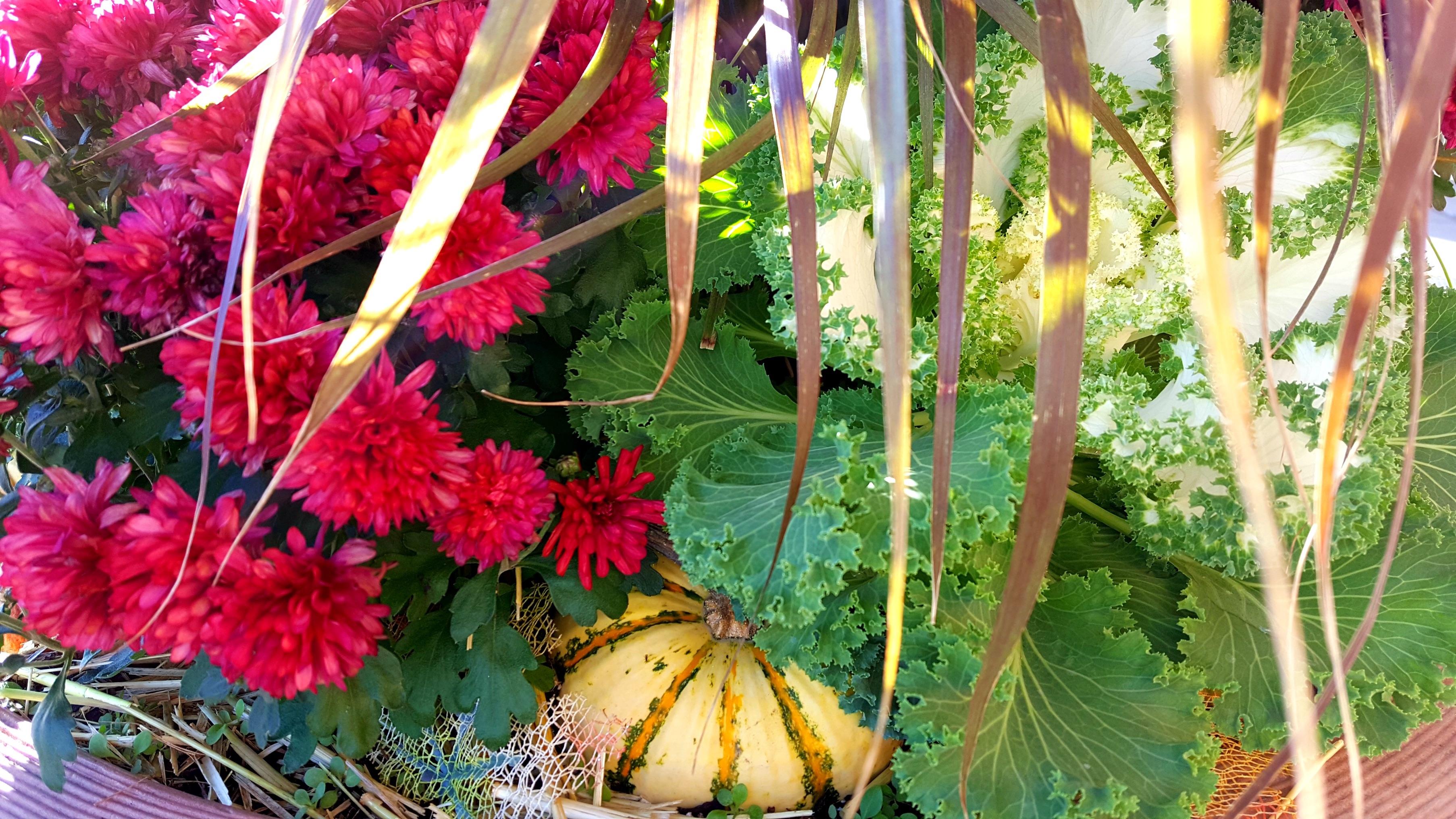Kostenlose foto : Blatt, Blume, Lebensmittel, produzieren, Gemüse ...