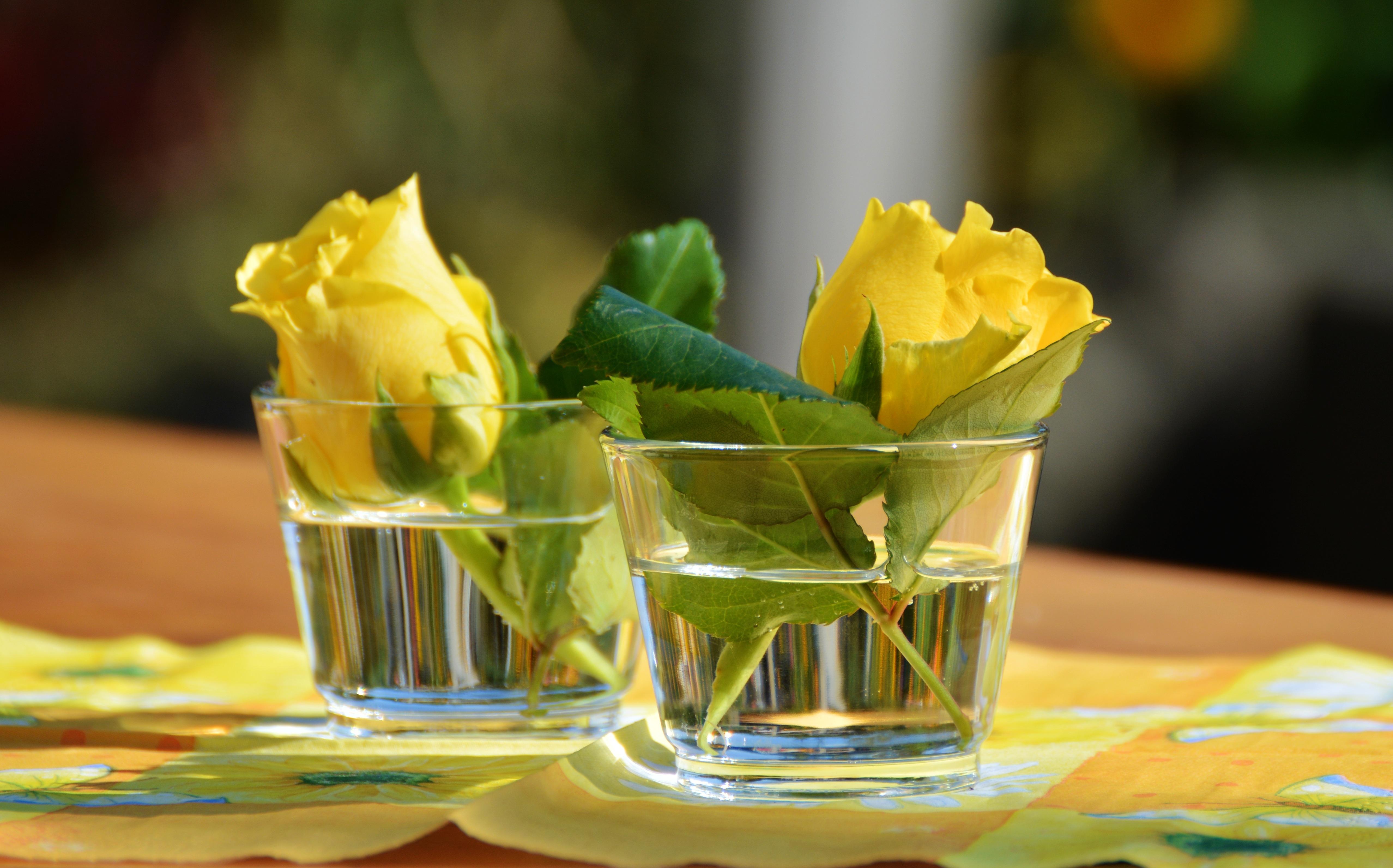 Kostenlose Foto Blatt Blume Feier Vase Dekoration