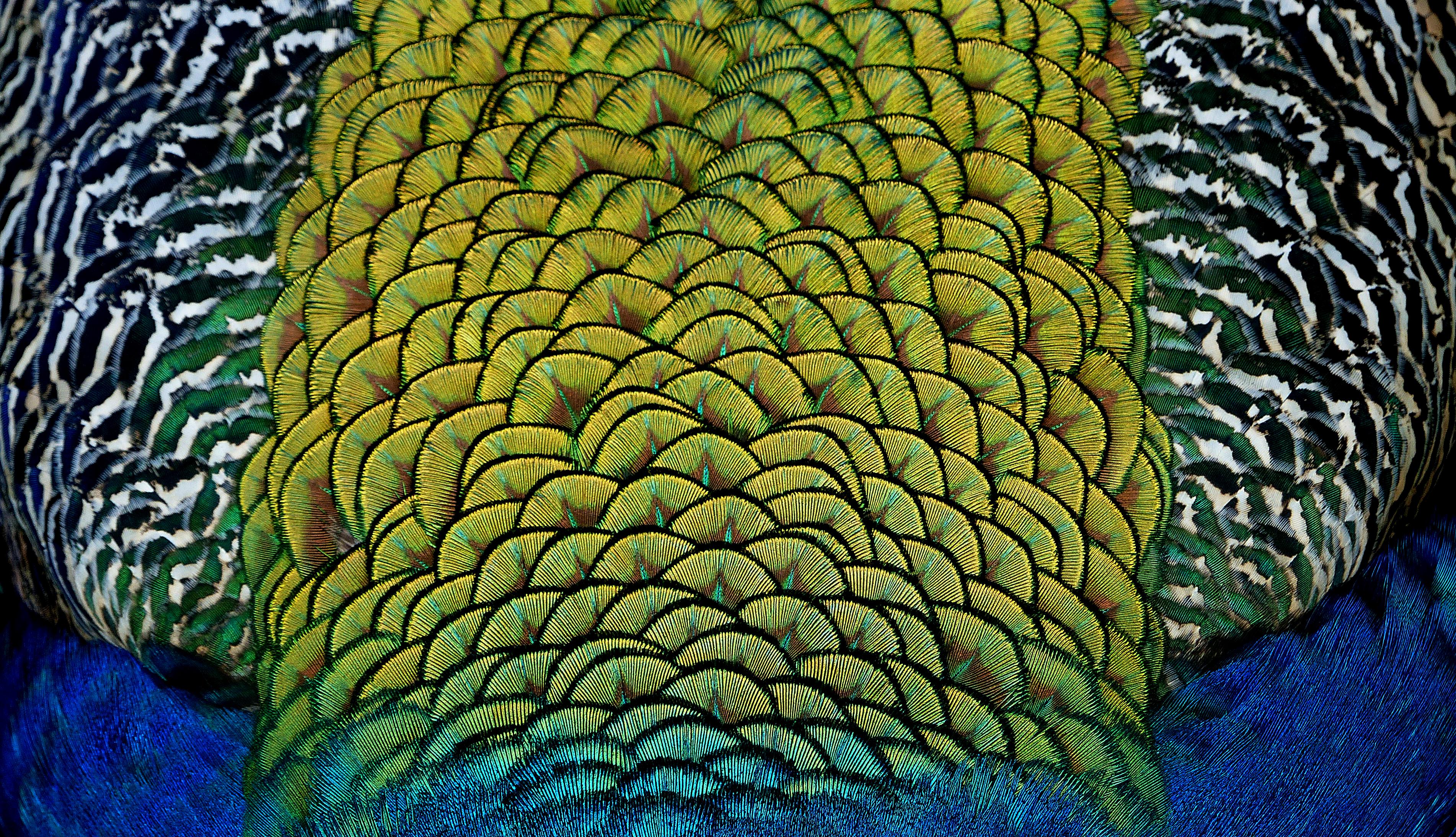 Poze Plantă Frunze Floare Verde Junglă Culoare