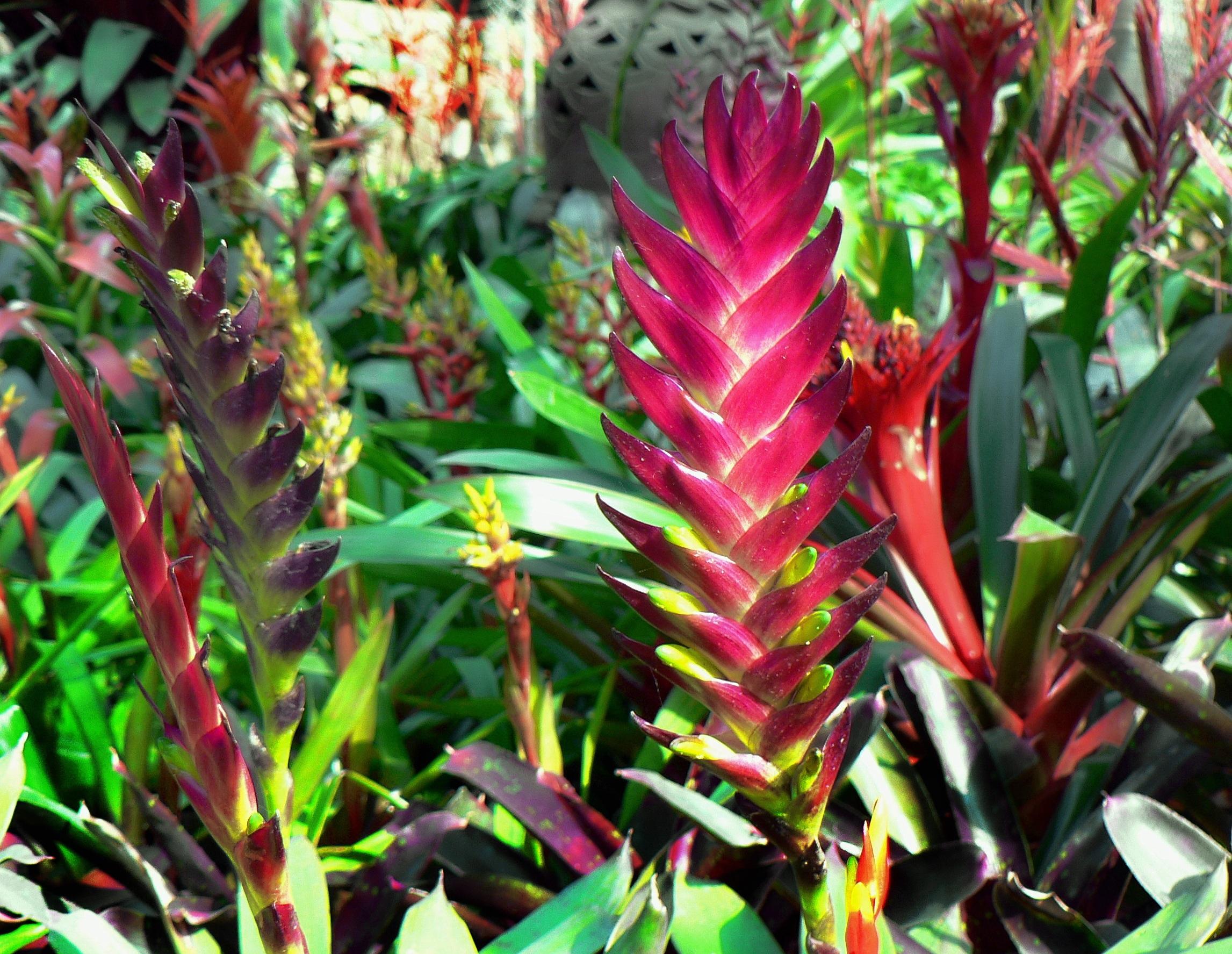 Fleurs jungle for Plante jungle