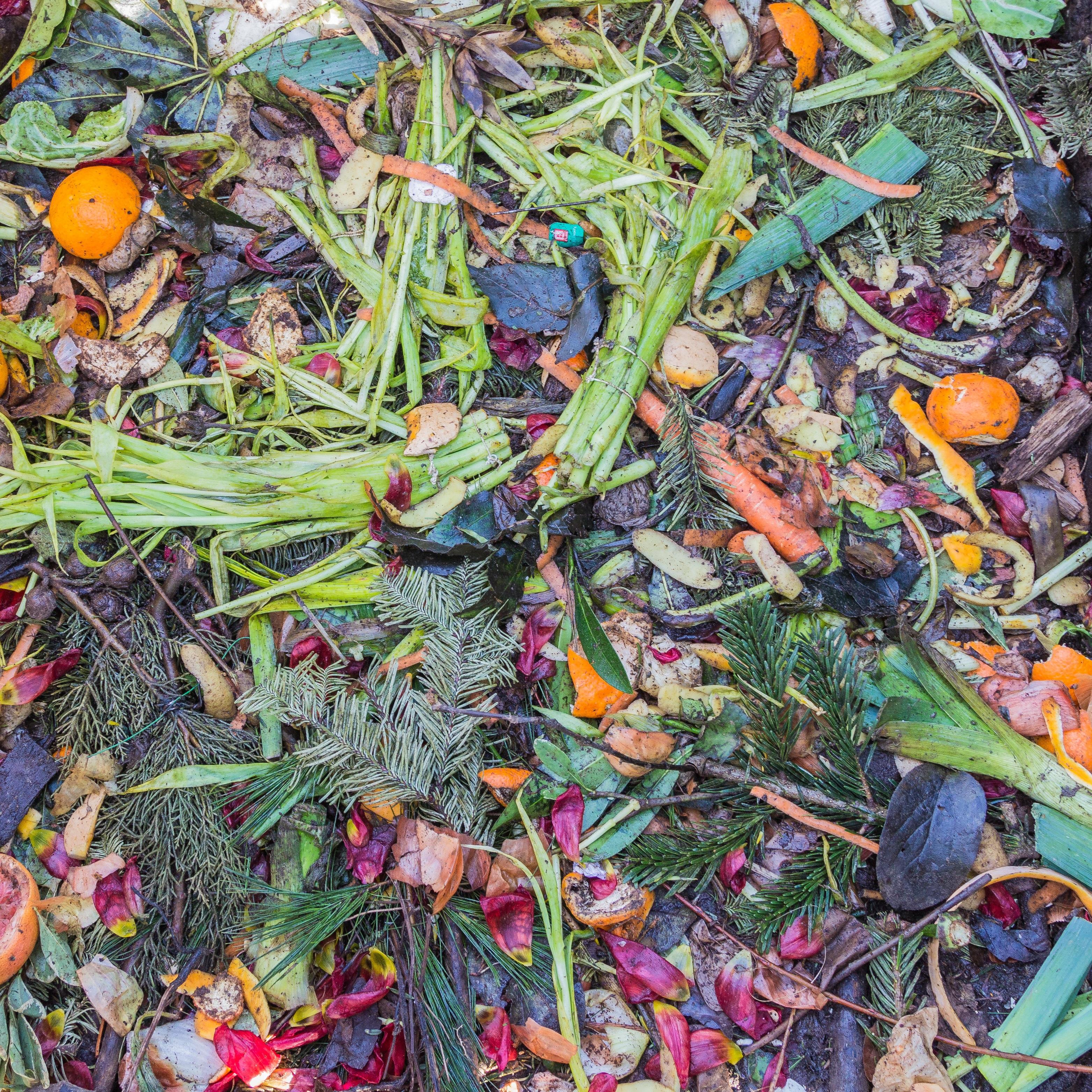 Free Images : leaf, flower, pattern, food, herb, produce ...