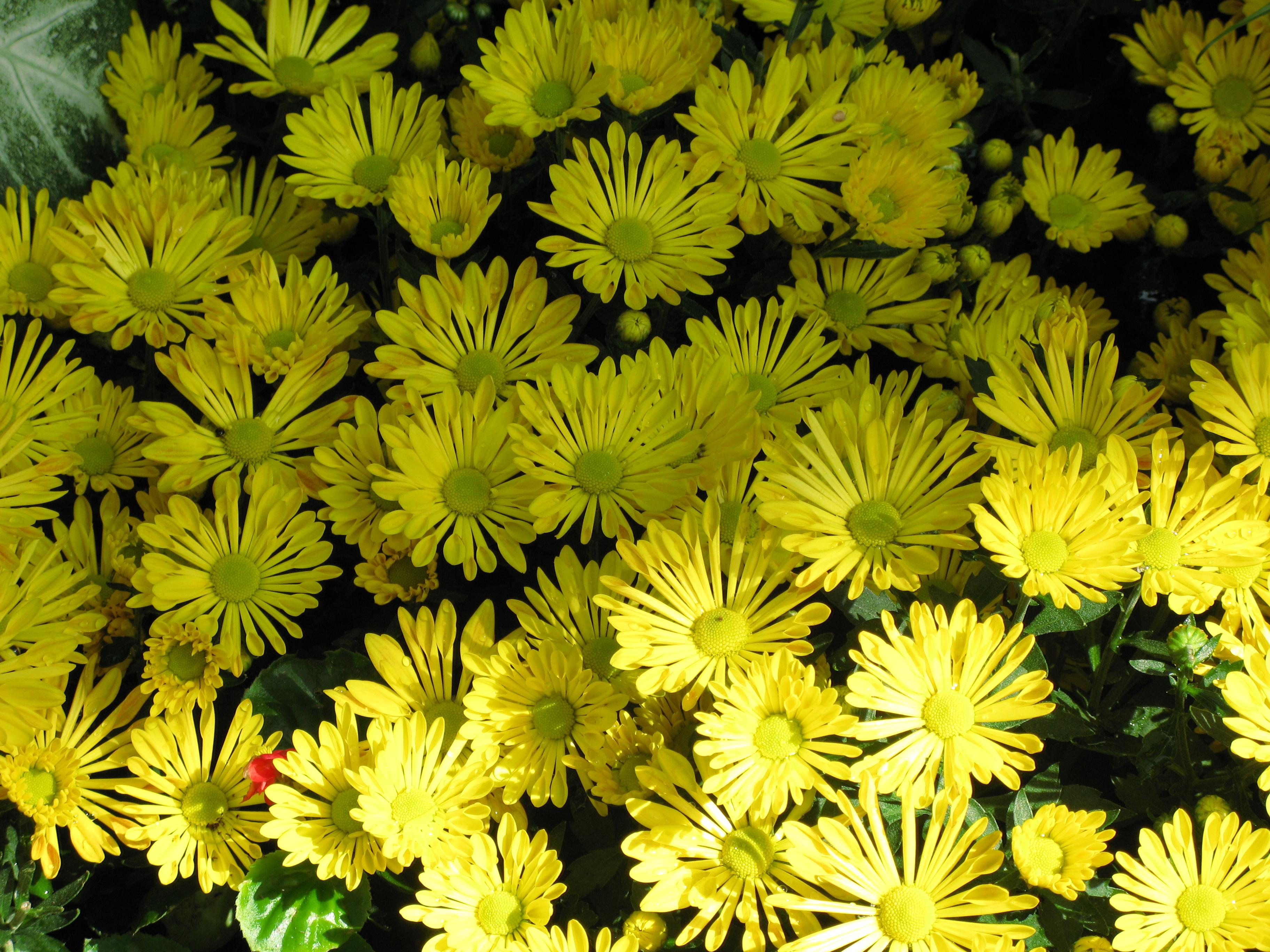 Free Images Leaf Flower Pattern High Botany Yellow Flora