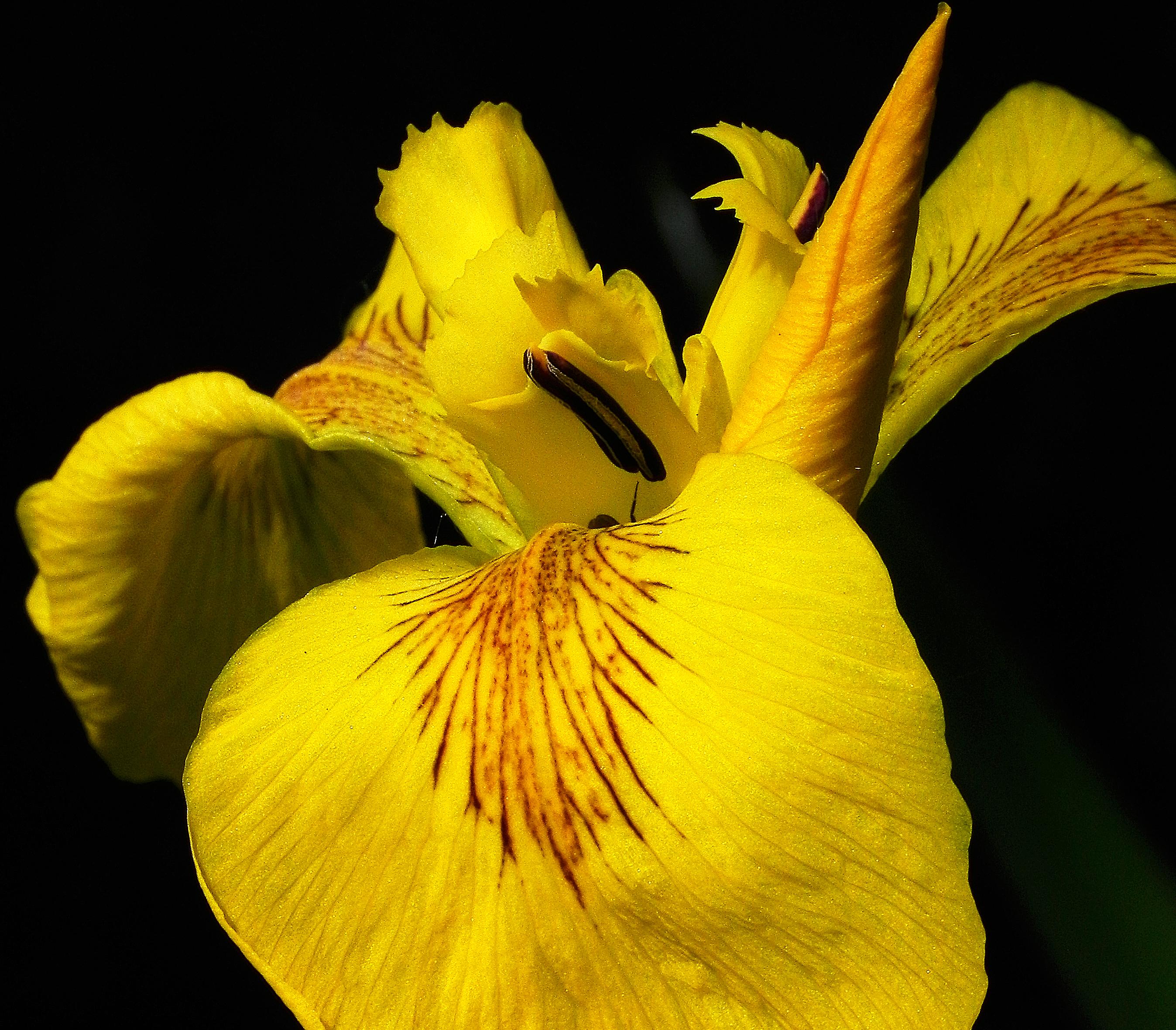 Fotos Gratis Hoja Flor Petalo Botanica Amarillo Flora Flores