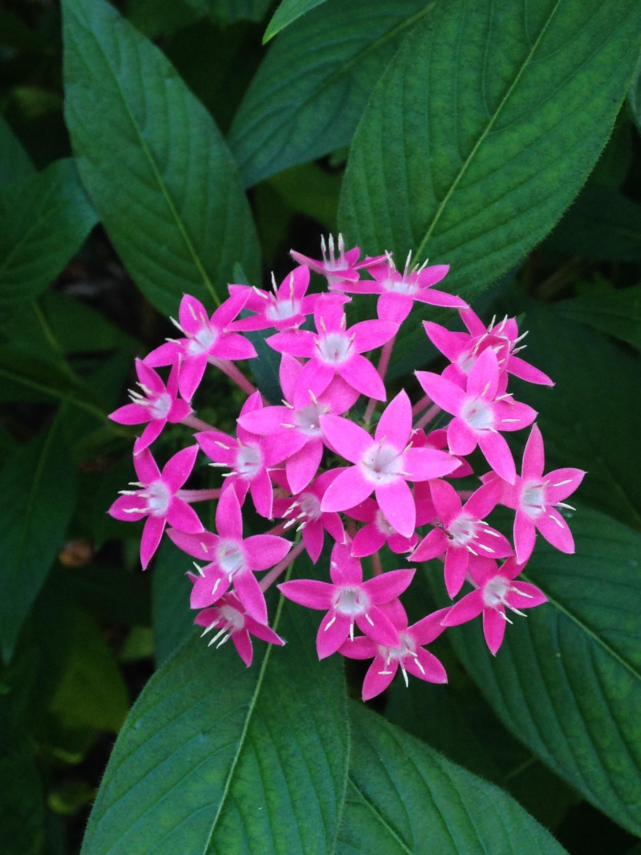 Kostenlose Foto Blatt Blume Blütenblatt Blumen Laub Frühling
